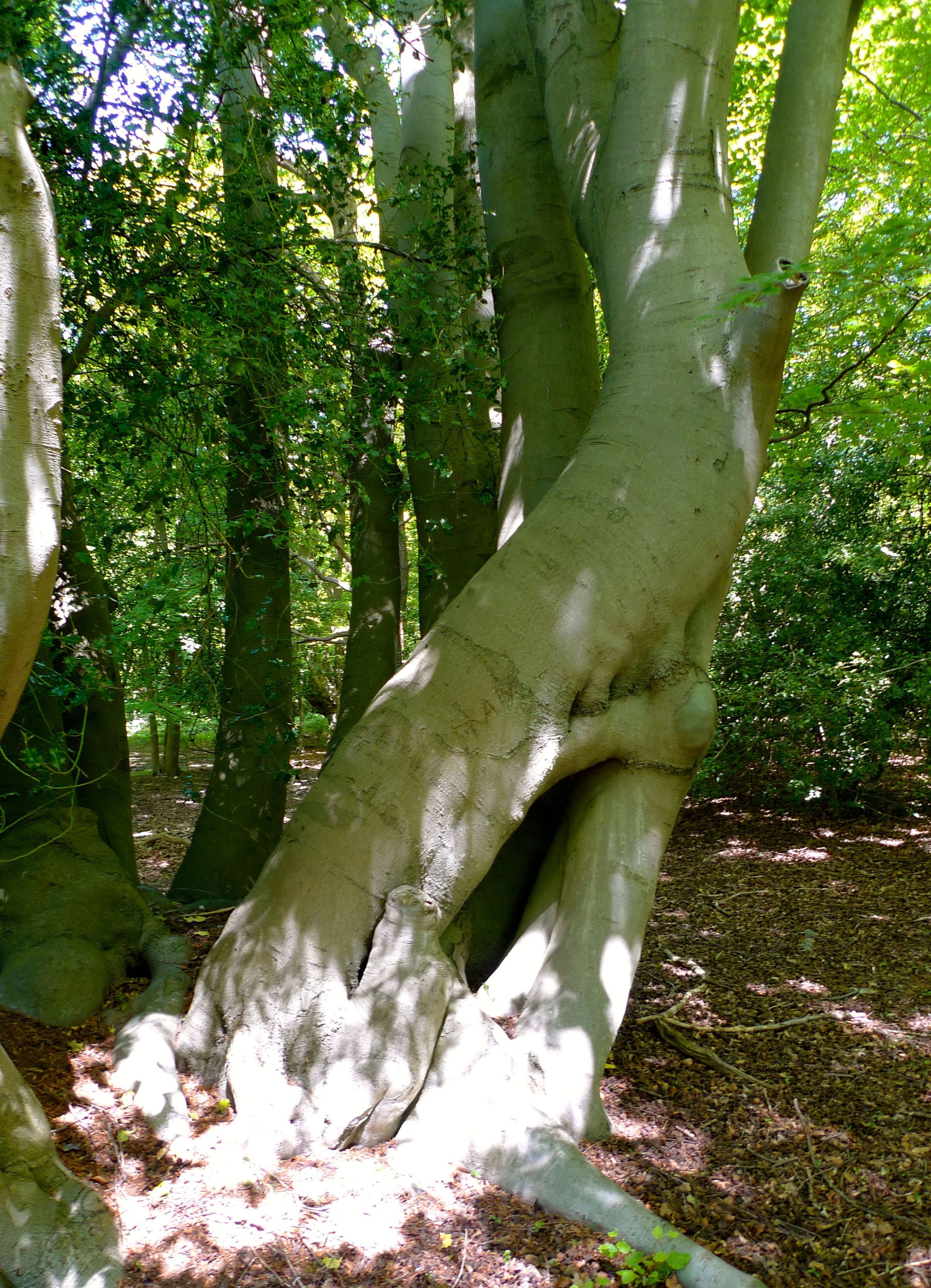 Discovering Epping Forest loving trees.jpg