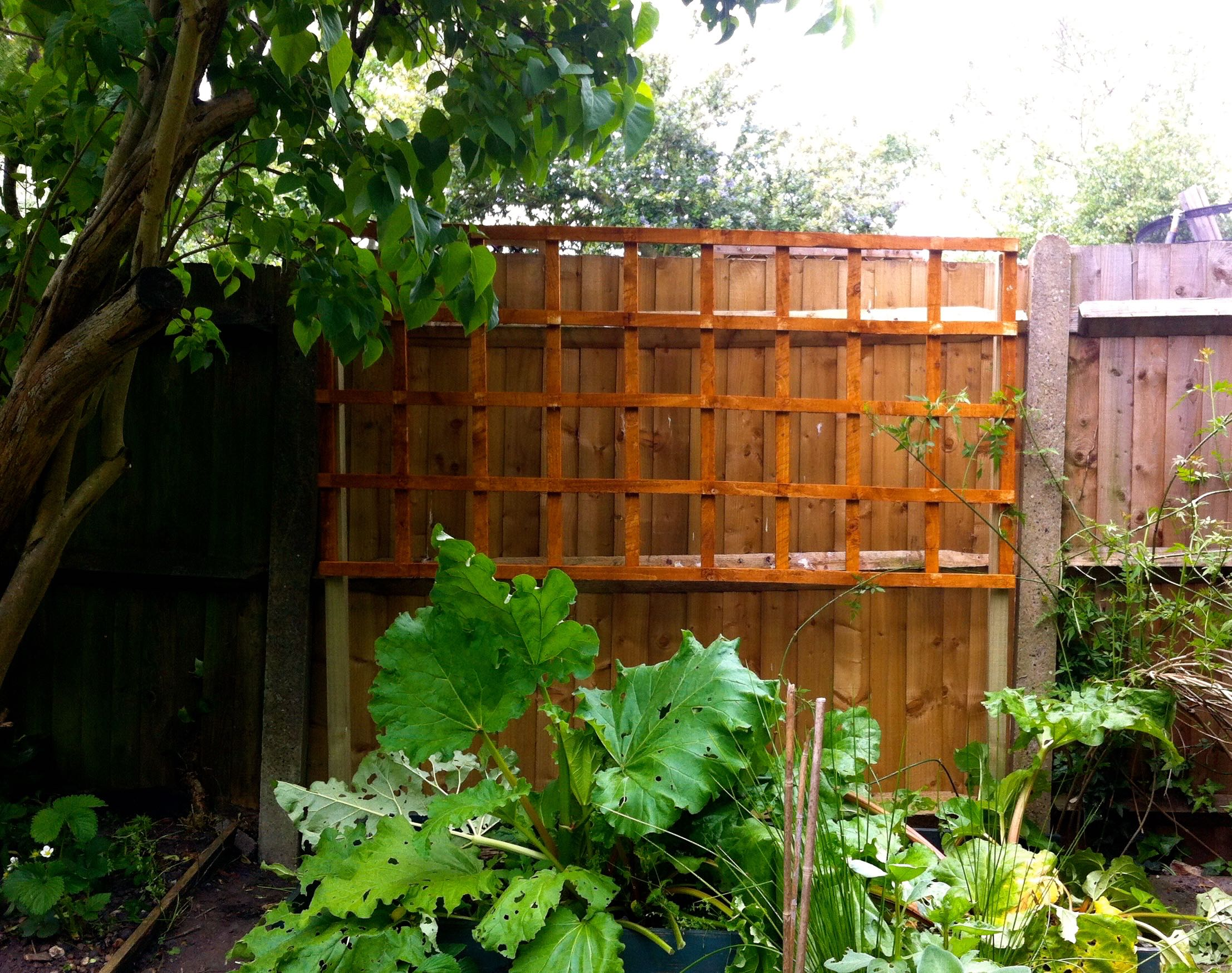 the trellis is up.jpg
