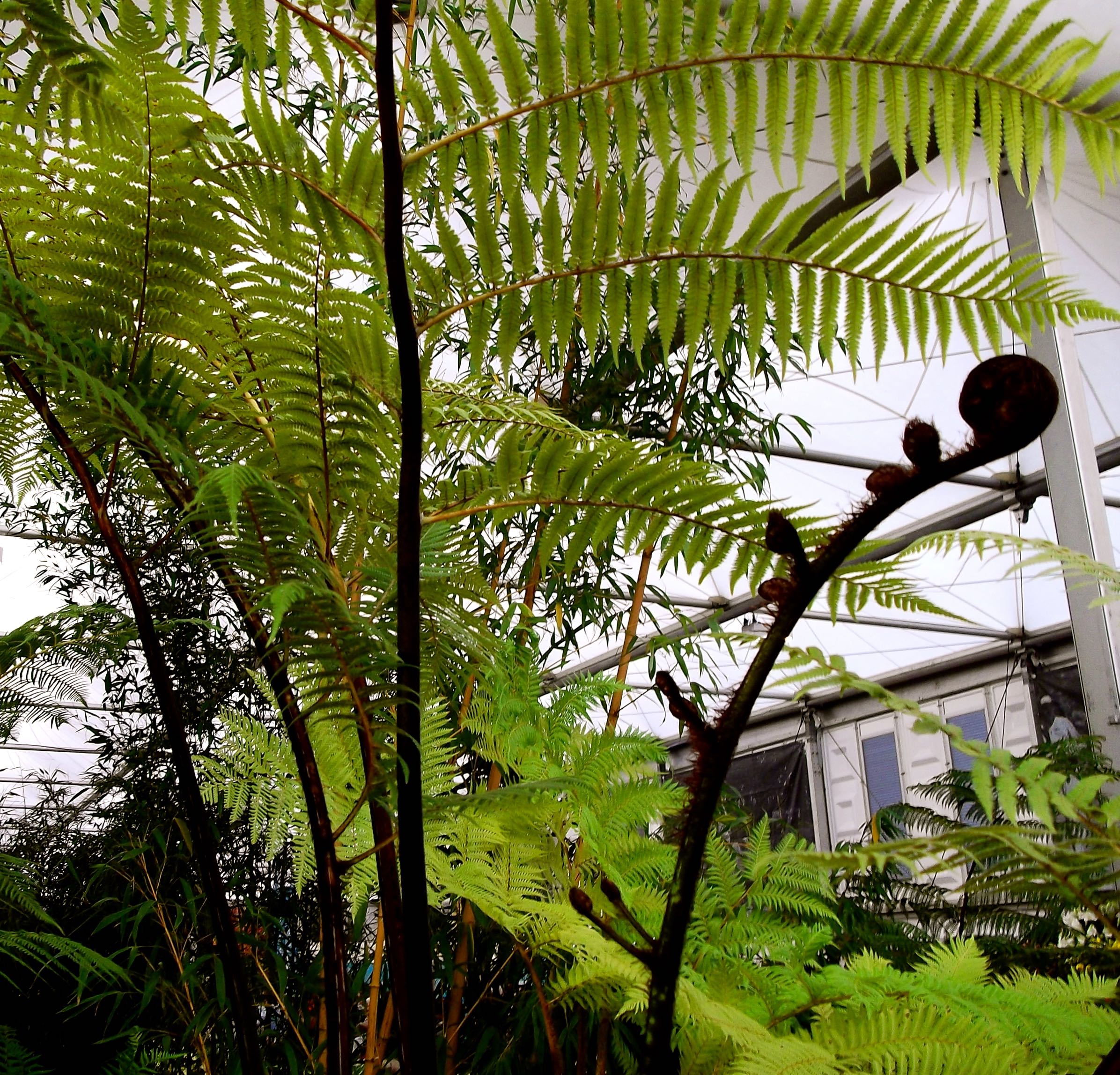 Fern love at the Ideal Home Show.jpg
