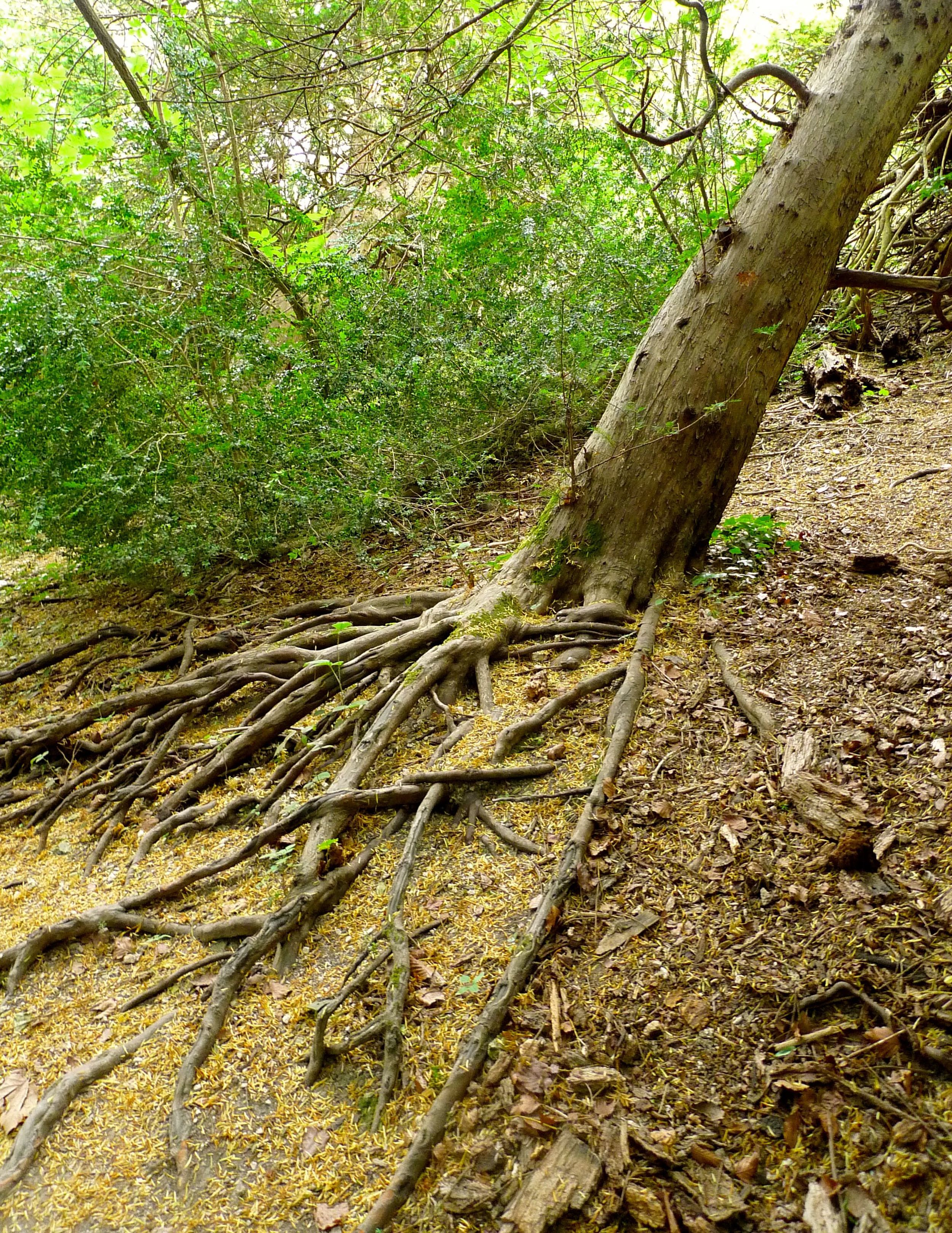 Treesgrowinguphill.jpg