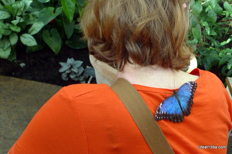 February: The butterflies at Wisley