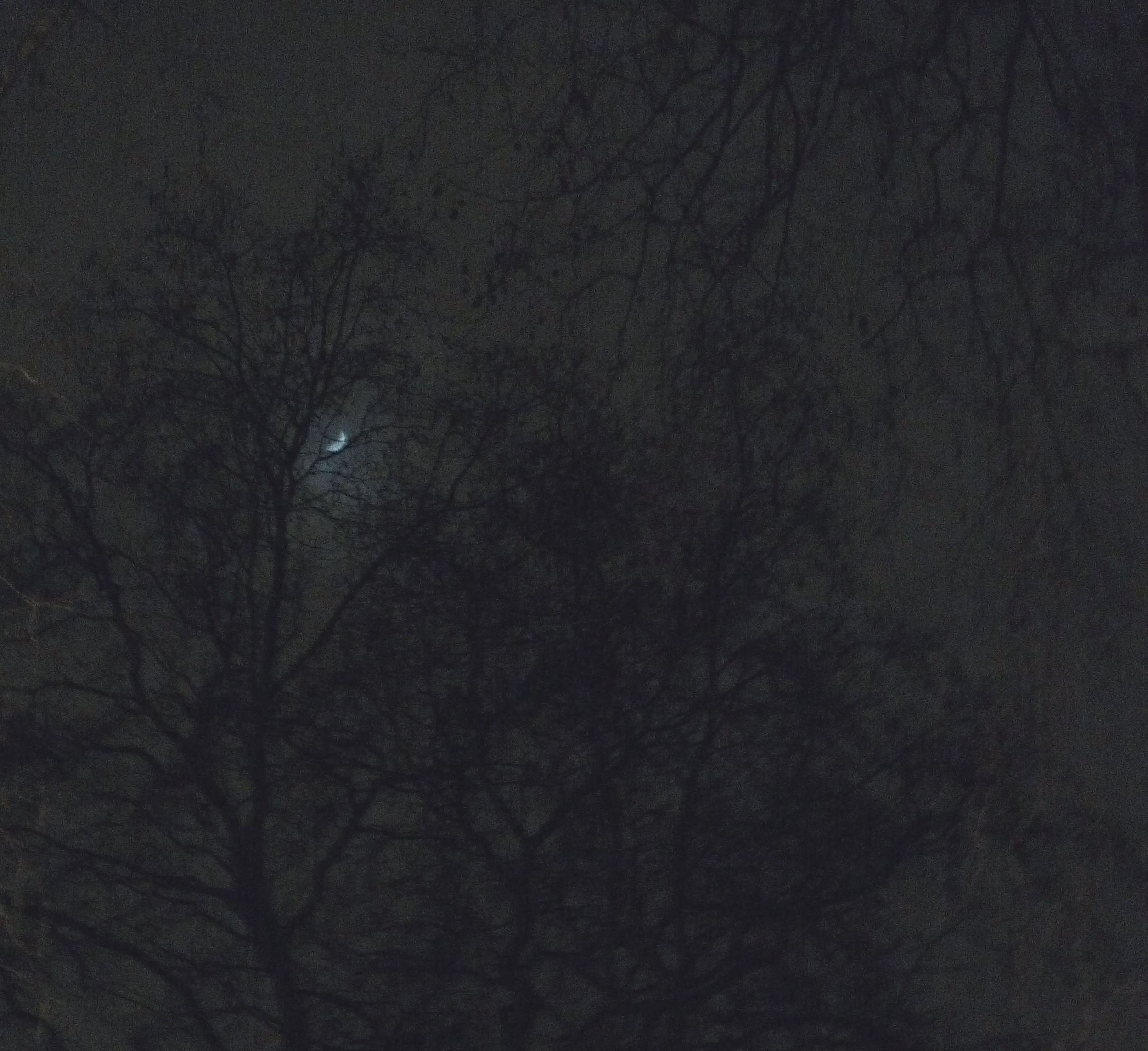 MOON THROUGH THE TREES GROSVENOR SQUARE LONDON