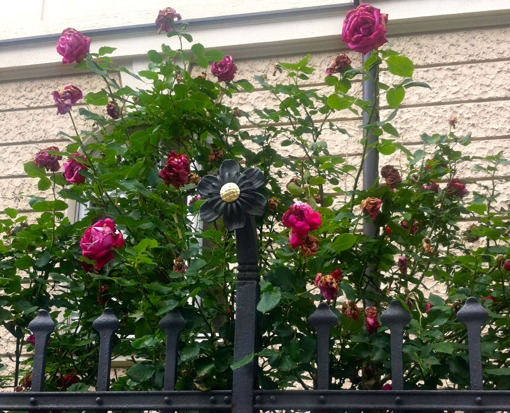 Roses and metalwork