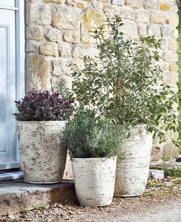 BIRCH EFFECT PLANTERS, PHOTO CREDIT COX & COX