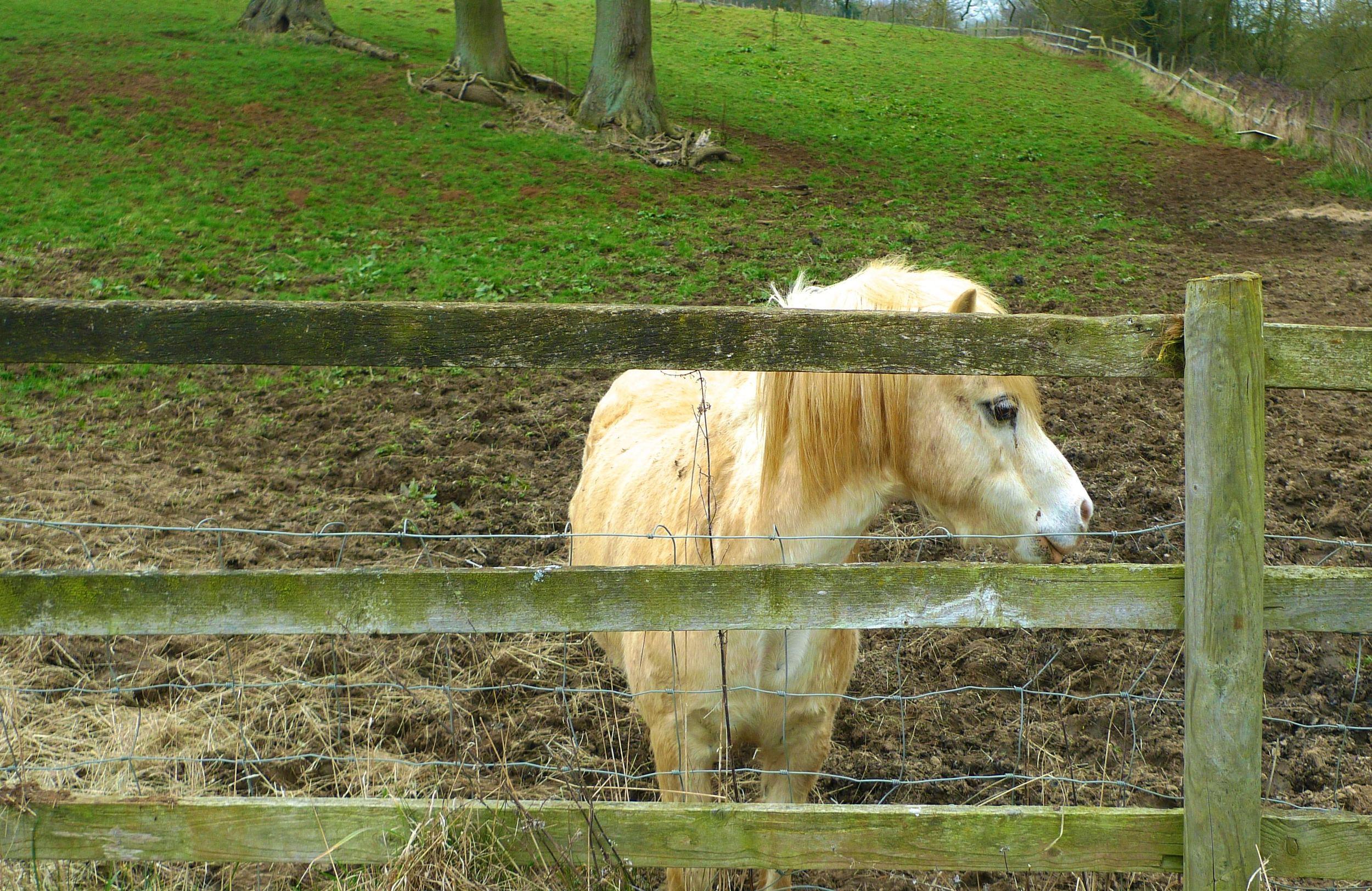 pony side view