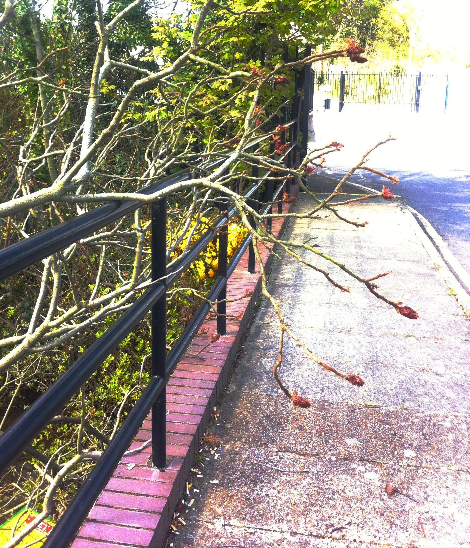 magnolia on the bridge