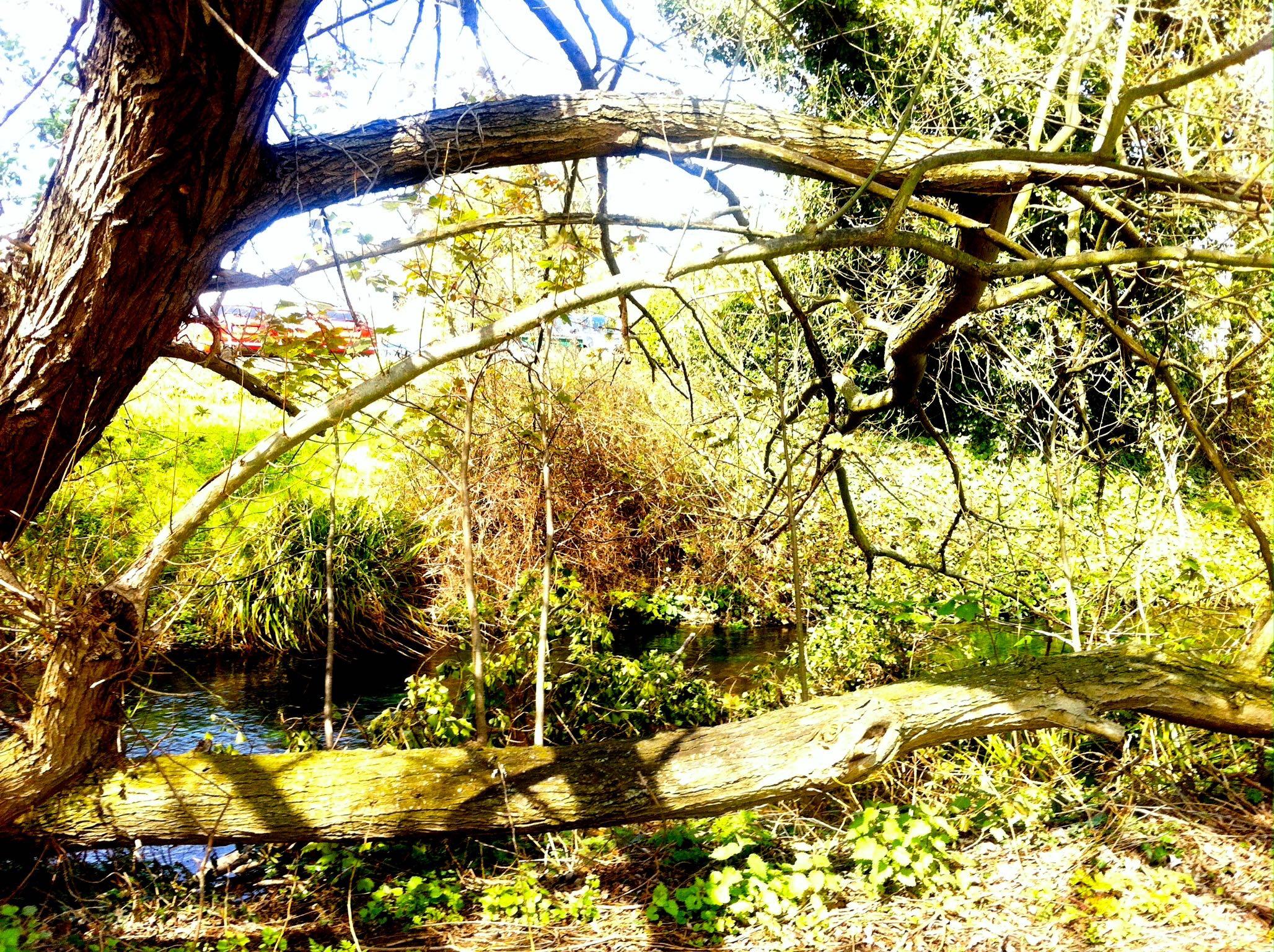 river setting