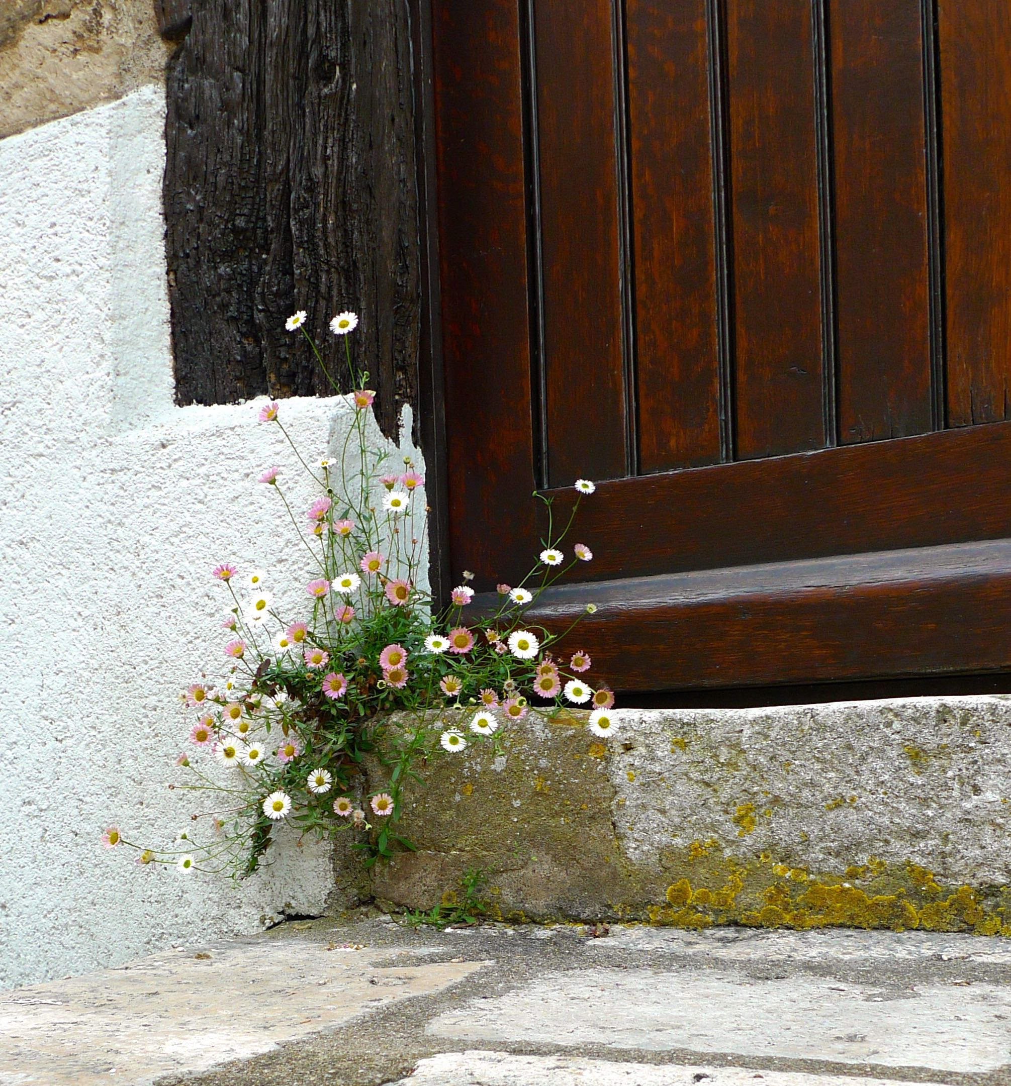 Flowers growing on the doorstep