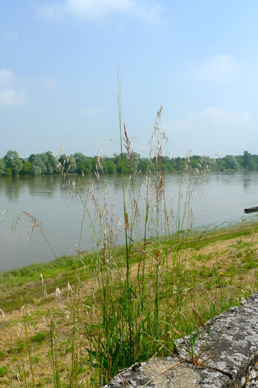 On the banks of the Loire - and a full river at that
