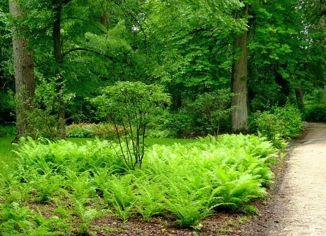 How many ferns - in my book you can never have too many