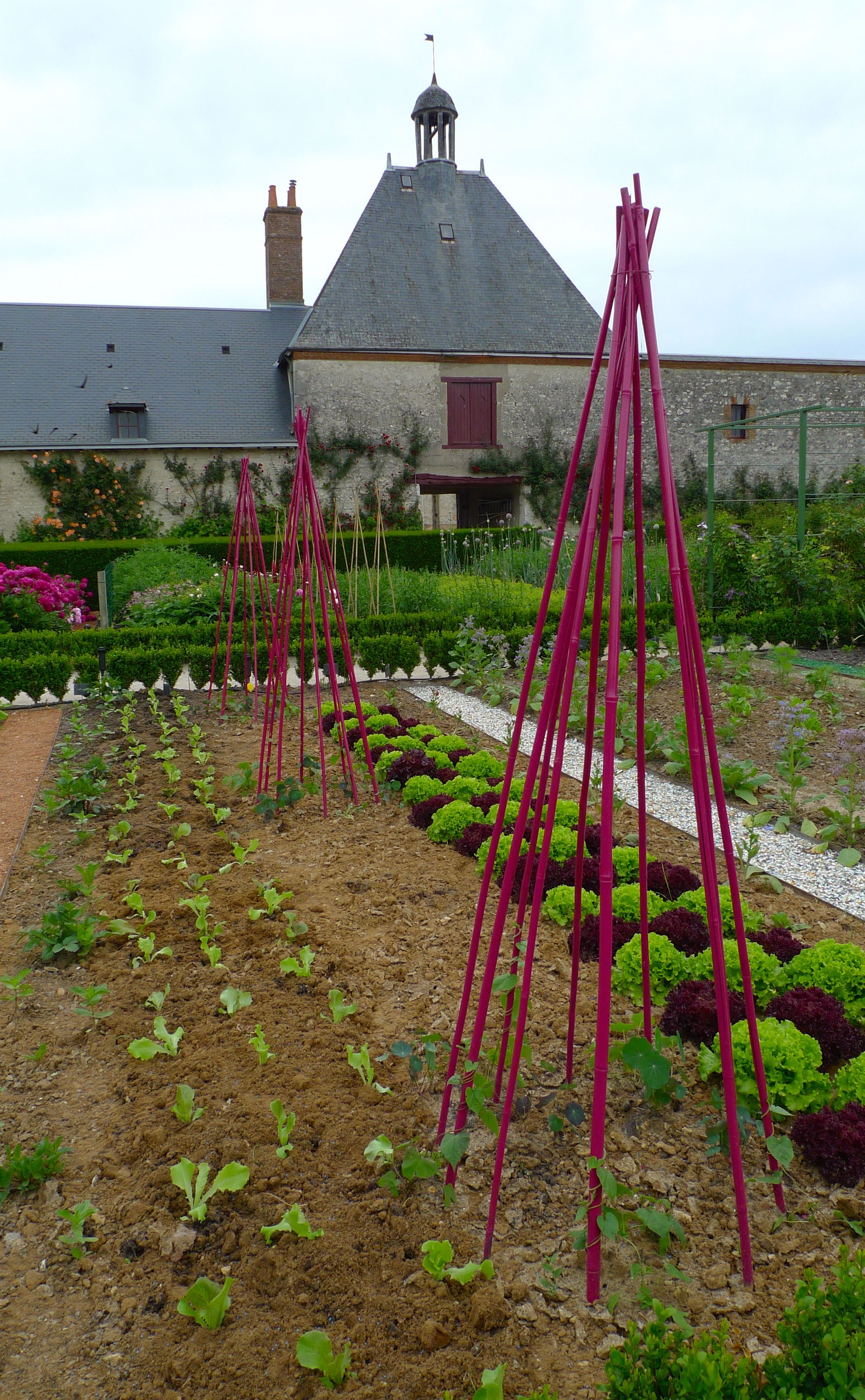 Pink bean poles at Cheverny for vegetables to clamber up