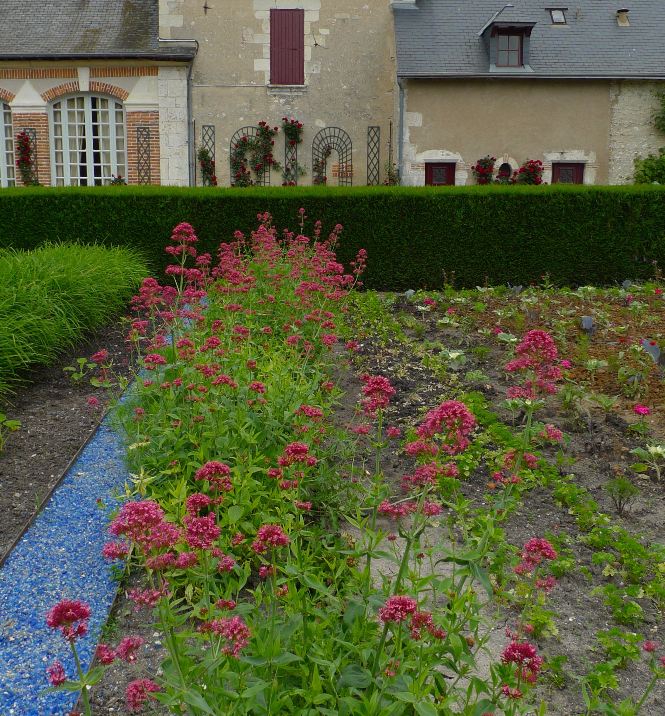A row of valerian added even more pink to the garden