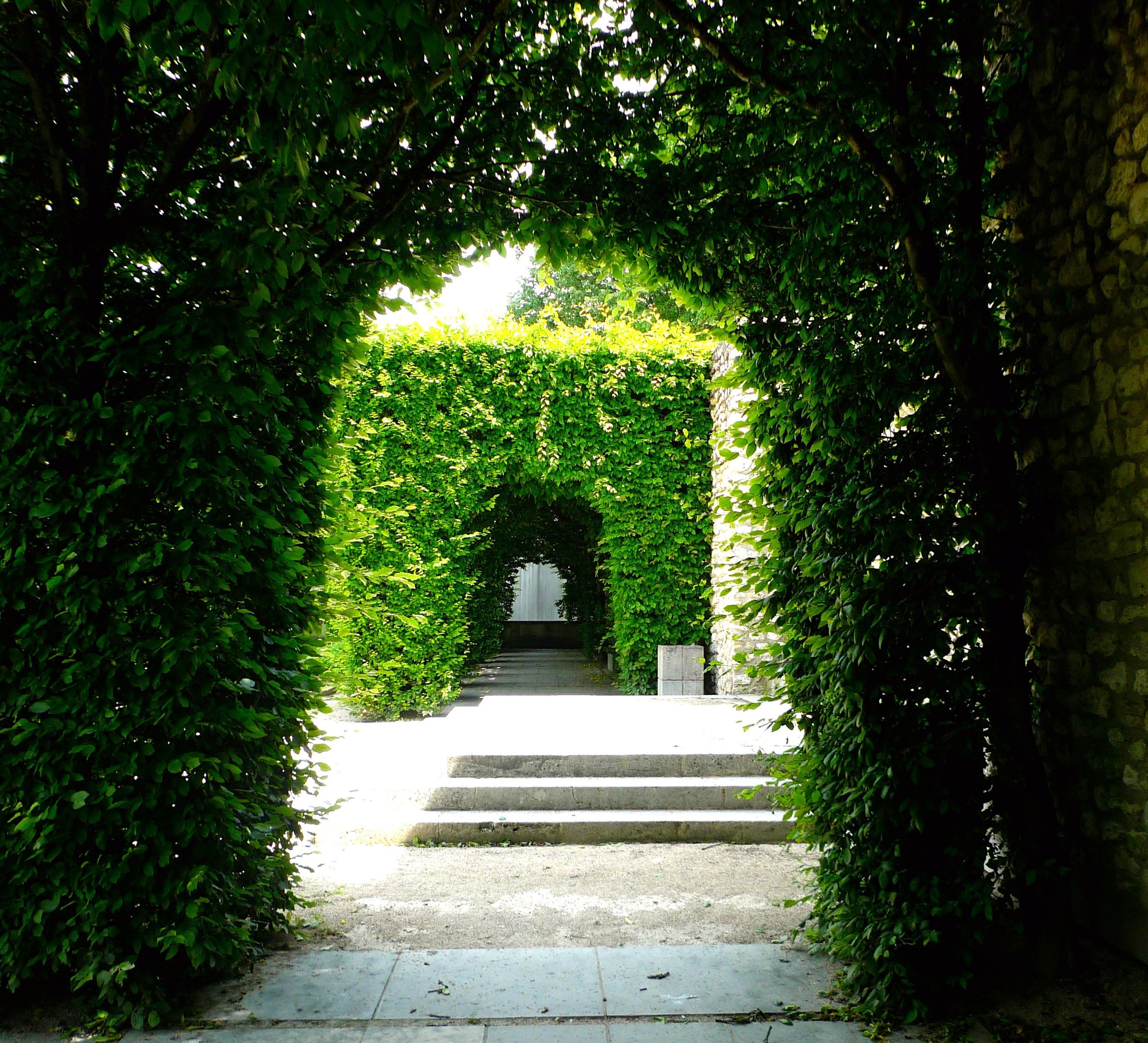 Through an archway of hedges