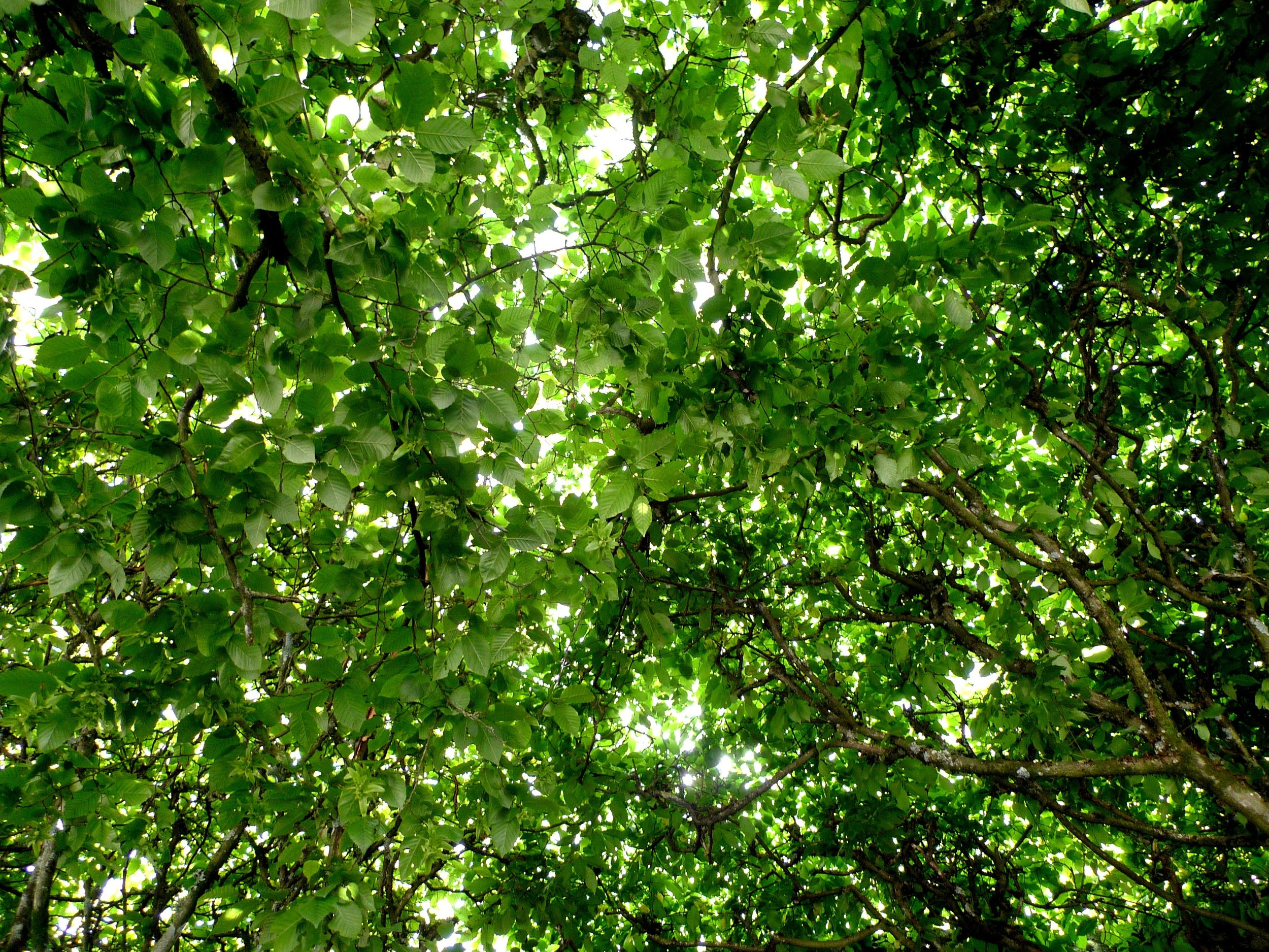 The tree canopy was fantastic and the shade was welcome too