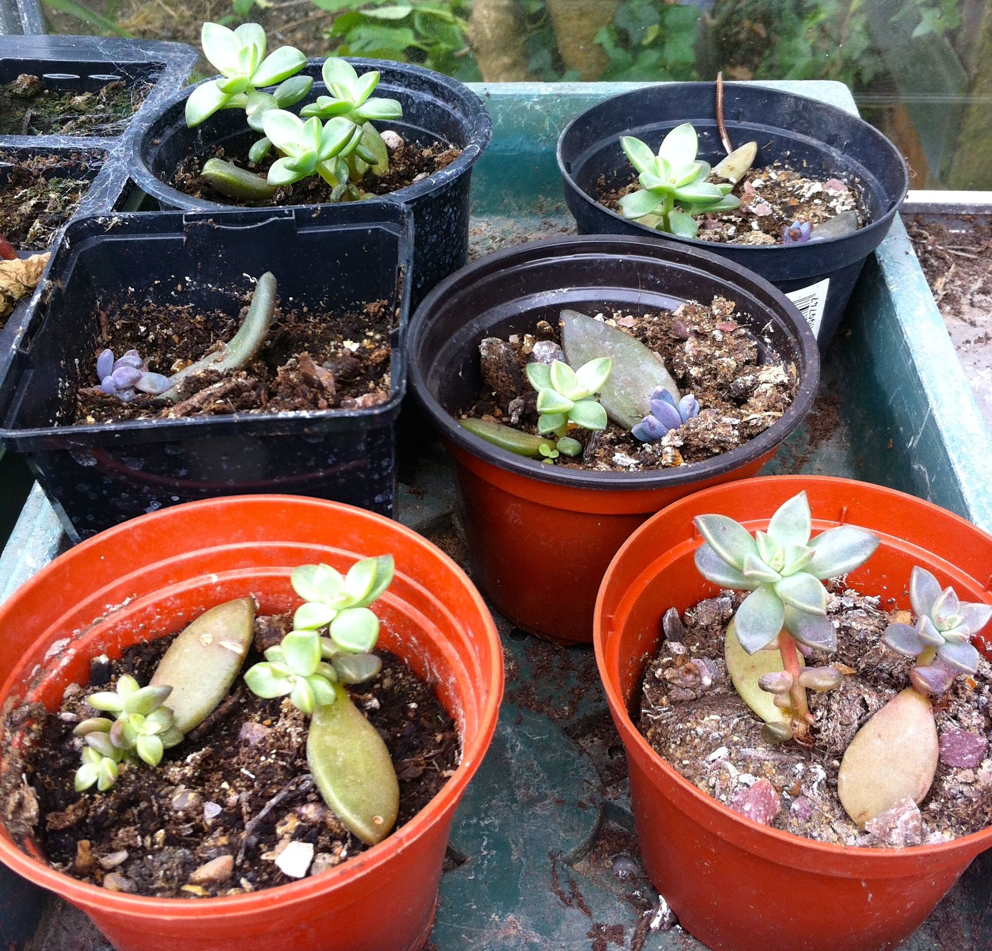Actually lots of new plants with very little effort