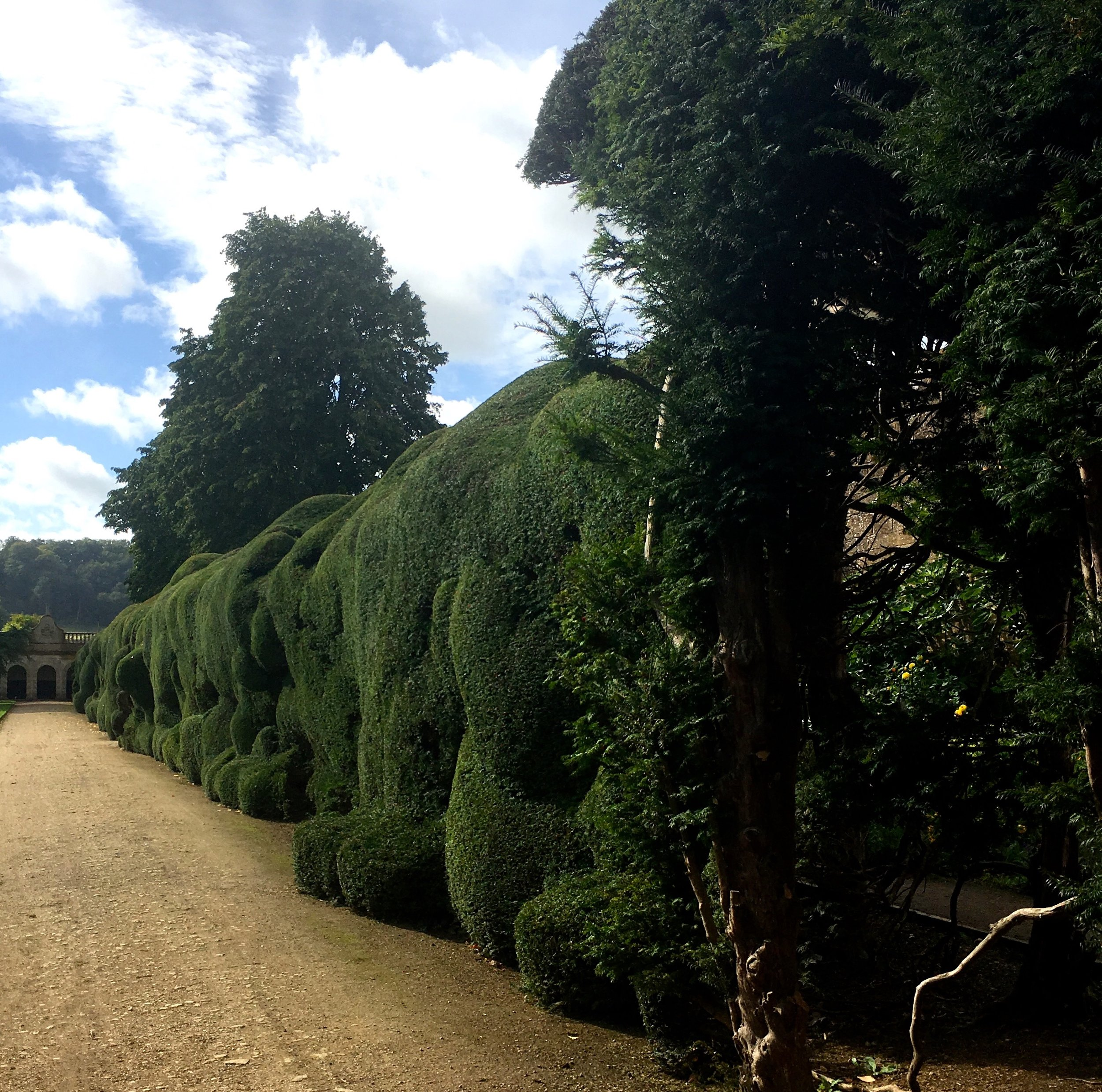 Wibbly Wobbly hedges at Montacute House