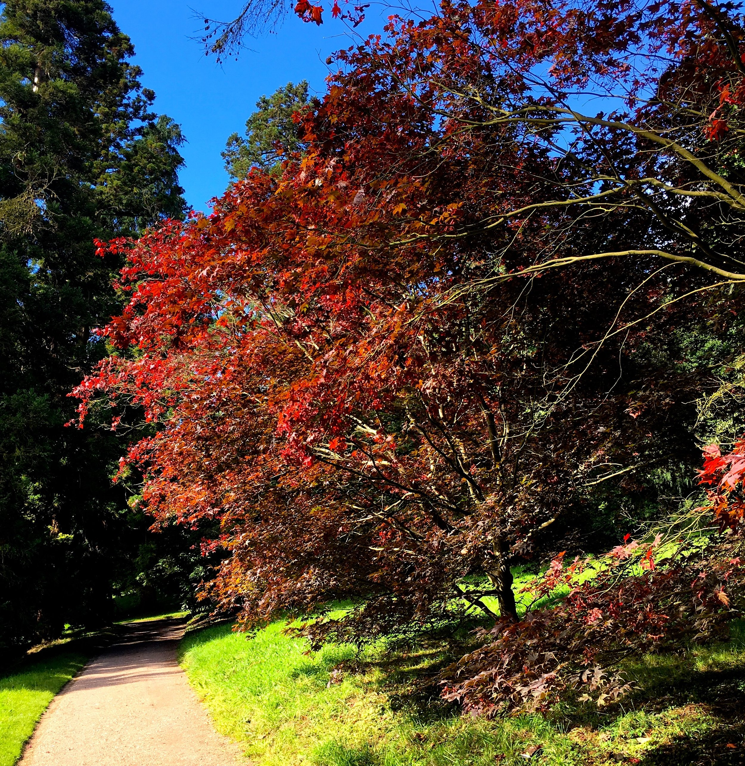 Colourful autumnal trees at Killerton