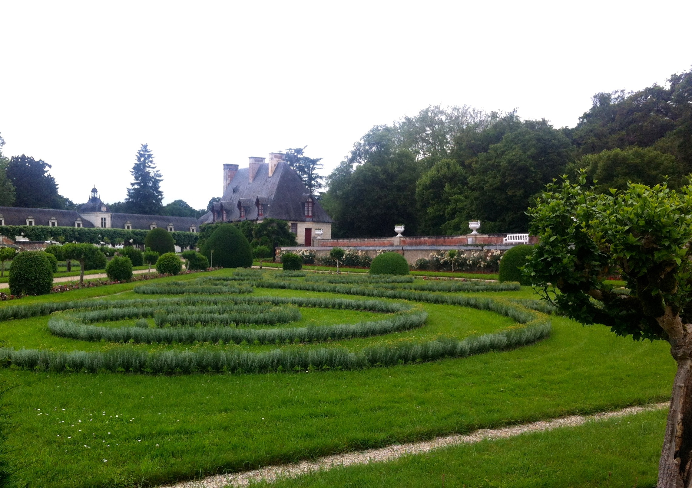 the shapes in the lawn are individual plants of santolini