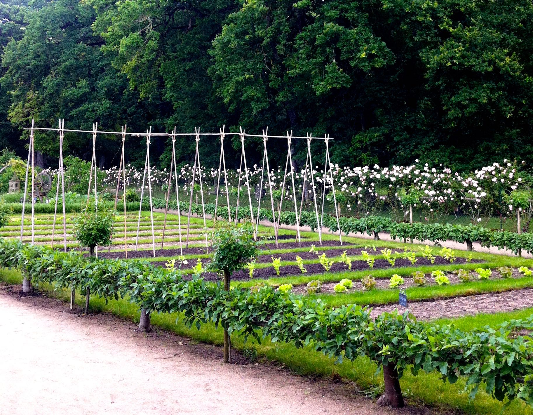 My first glimpse of the orderly flower and vegetable garden at chateau de chenonceau