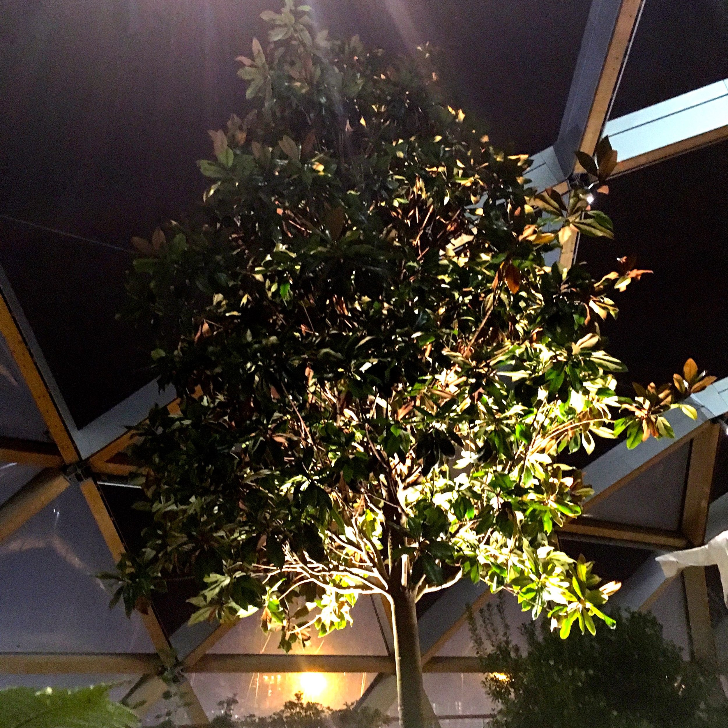 Trees in the roof garden in crossrail place in Canary Wharf