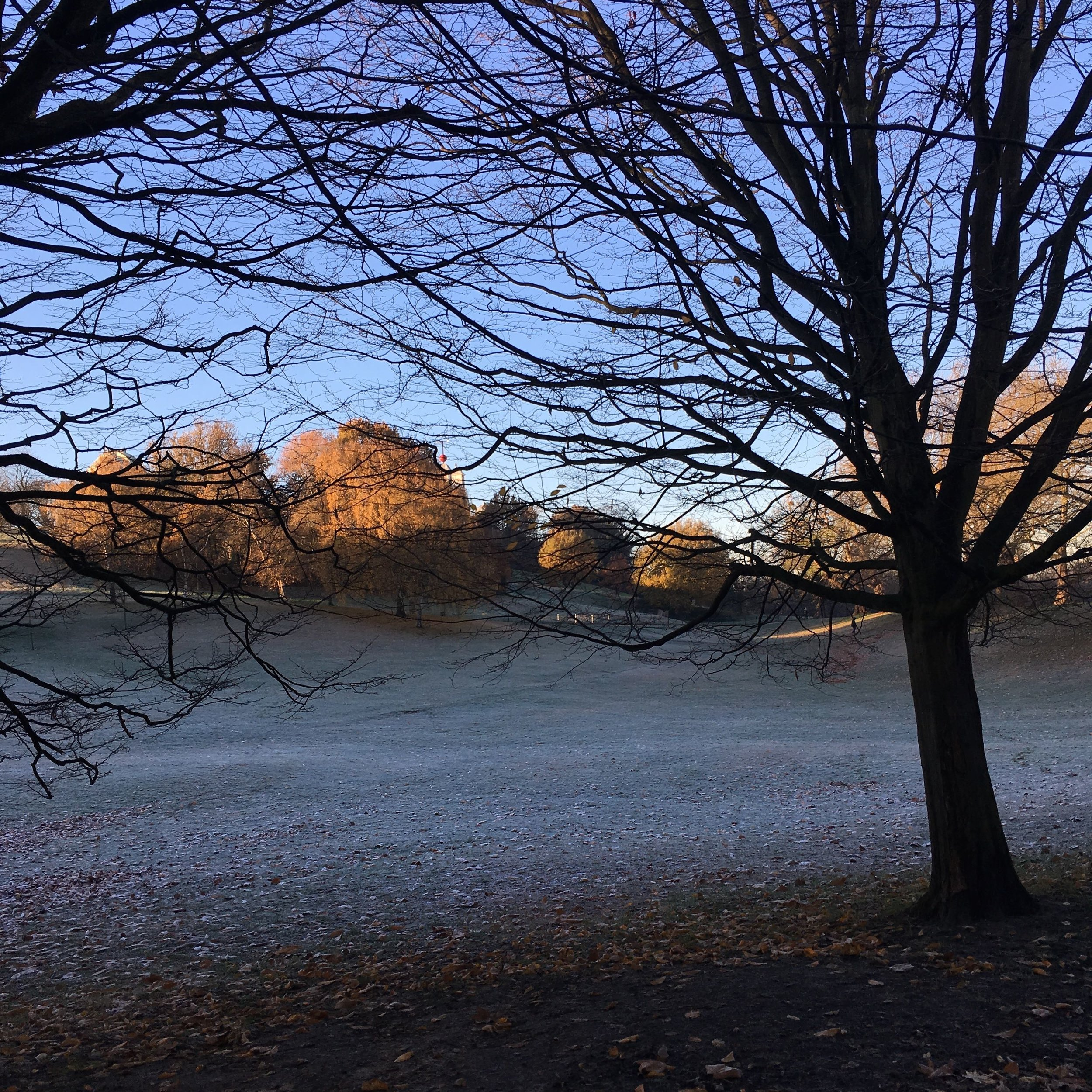 A frosty morning in Greenwich Park, London