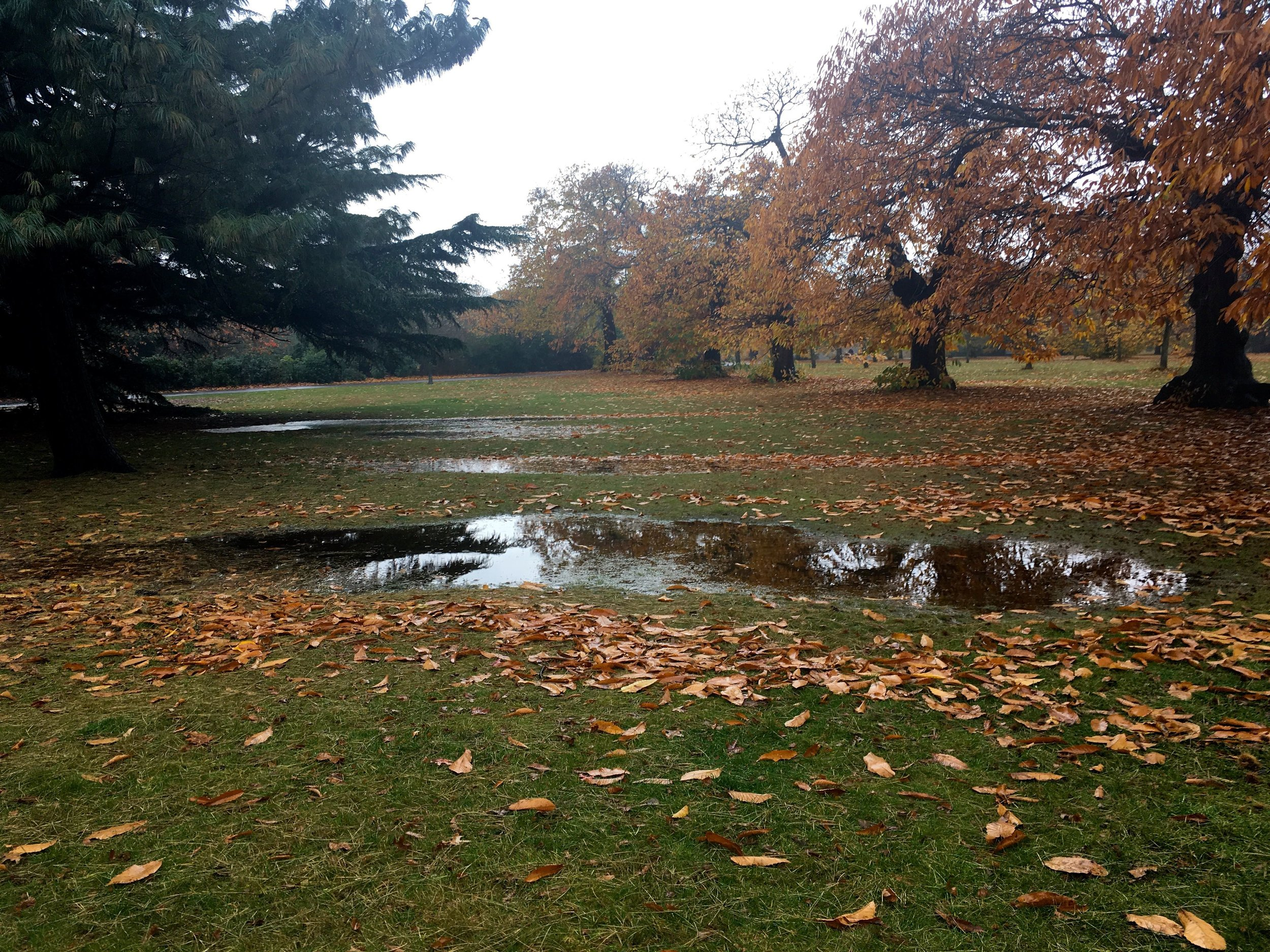 But there's been squelchier times too, after heavy rainfall there were puddles on the grass throughout greenwich park