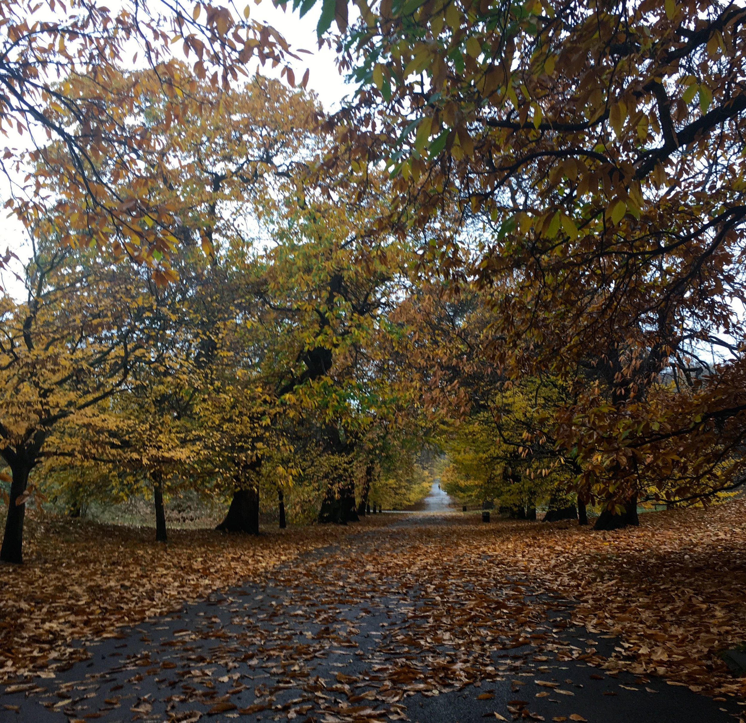 As the month went on the leaves on the trees were less and less