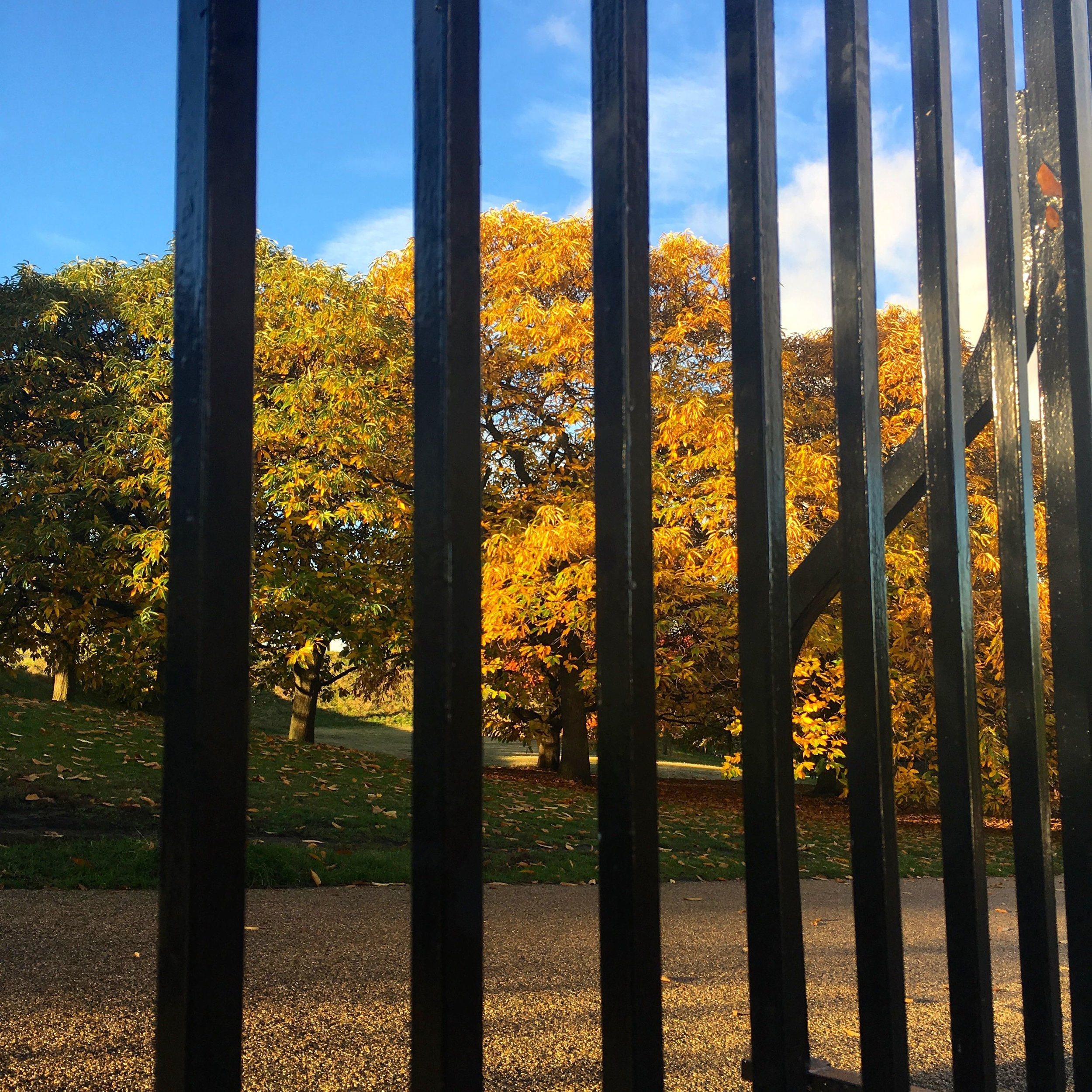a different view of greenwich park, this time from the street and through the railings