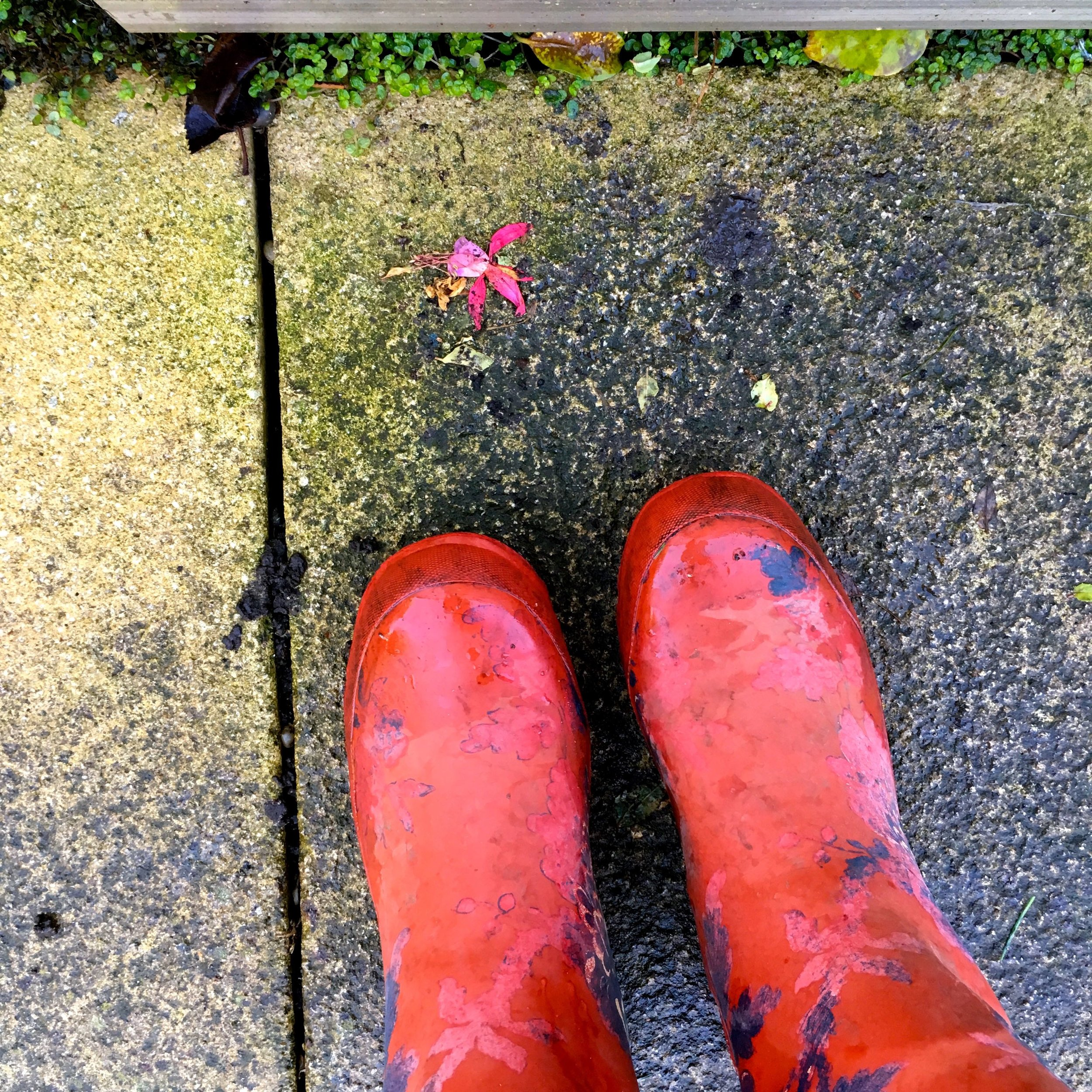 faded wellies and a faded fuchsia flower