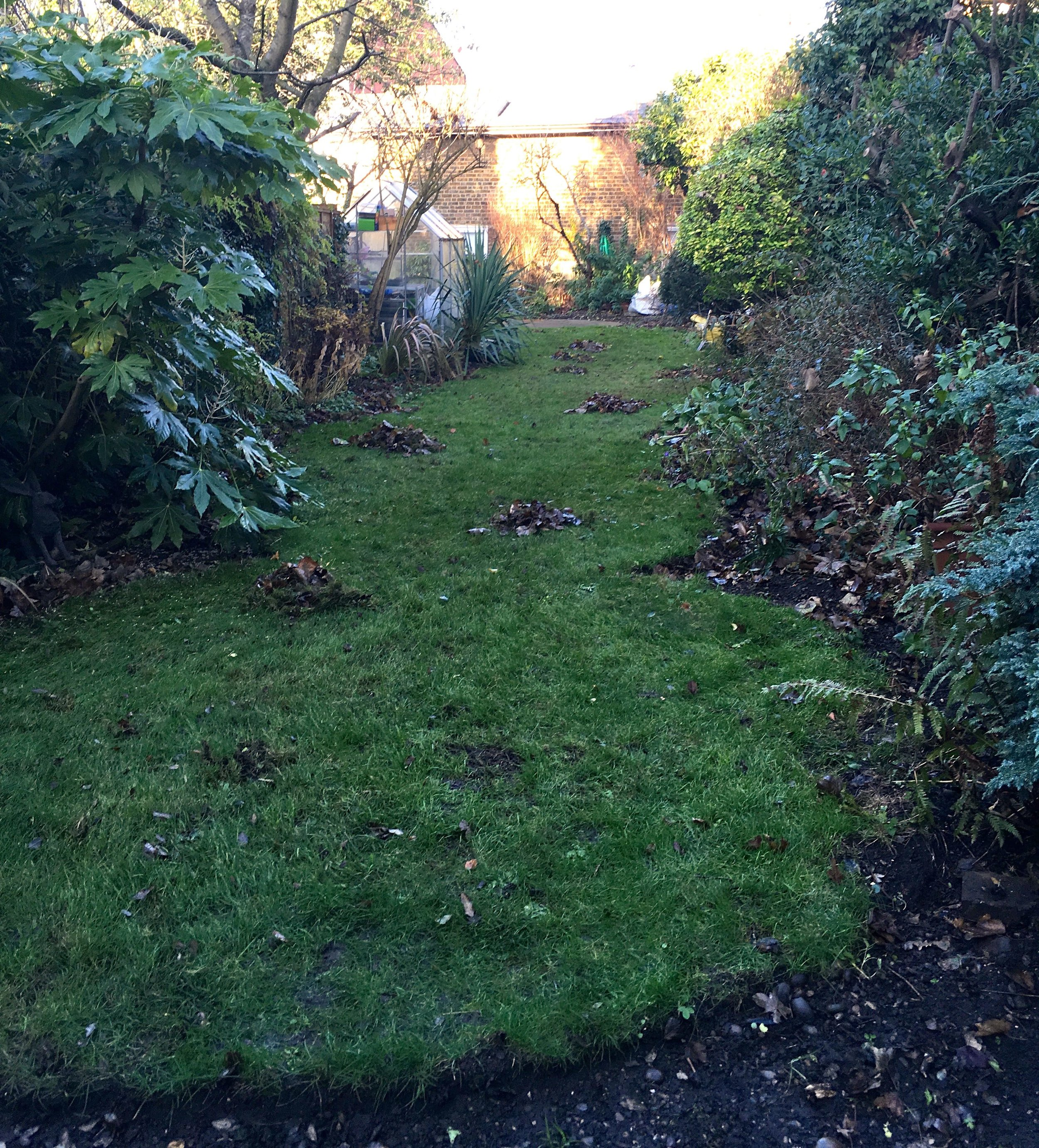 A view up the garden while the leaf collection was in progress. The bags of leaves are destined for my leaf compost heap at the allotment