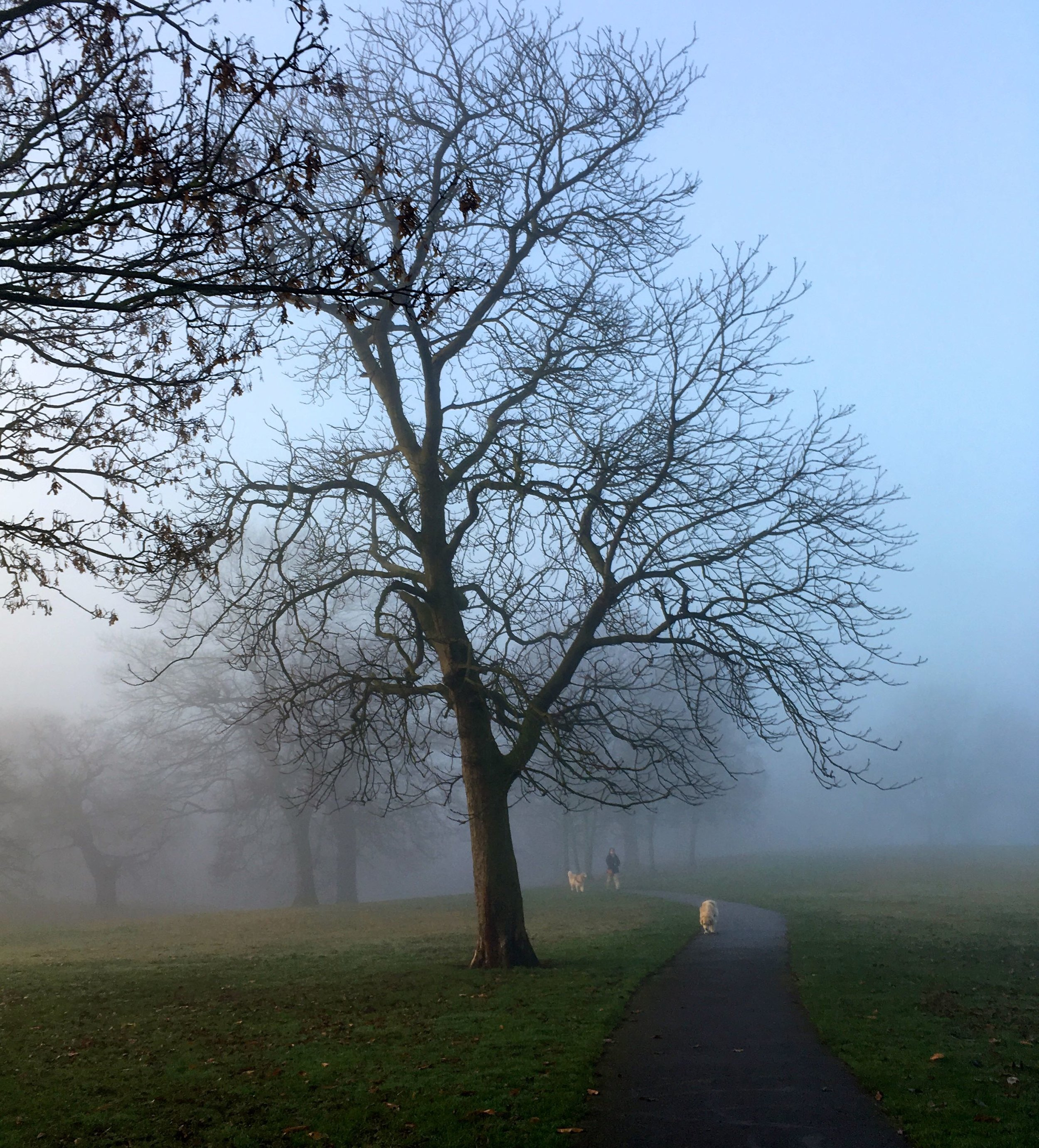 Fog inside greenwich park made for some eery views and I knew I had to take some pictures
