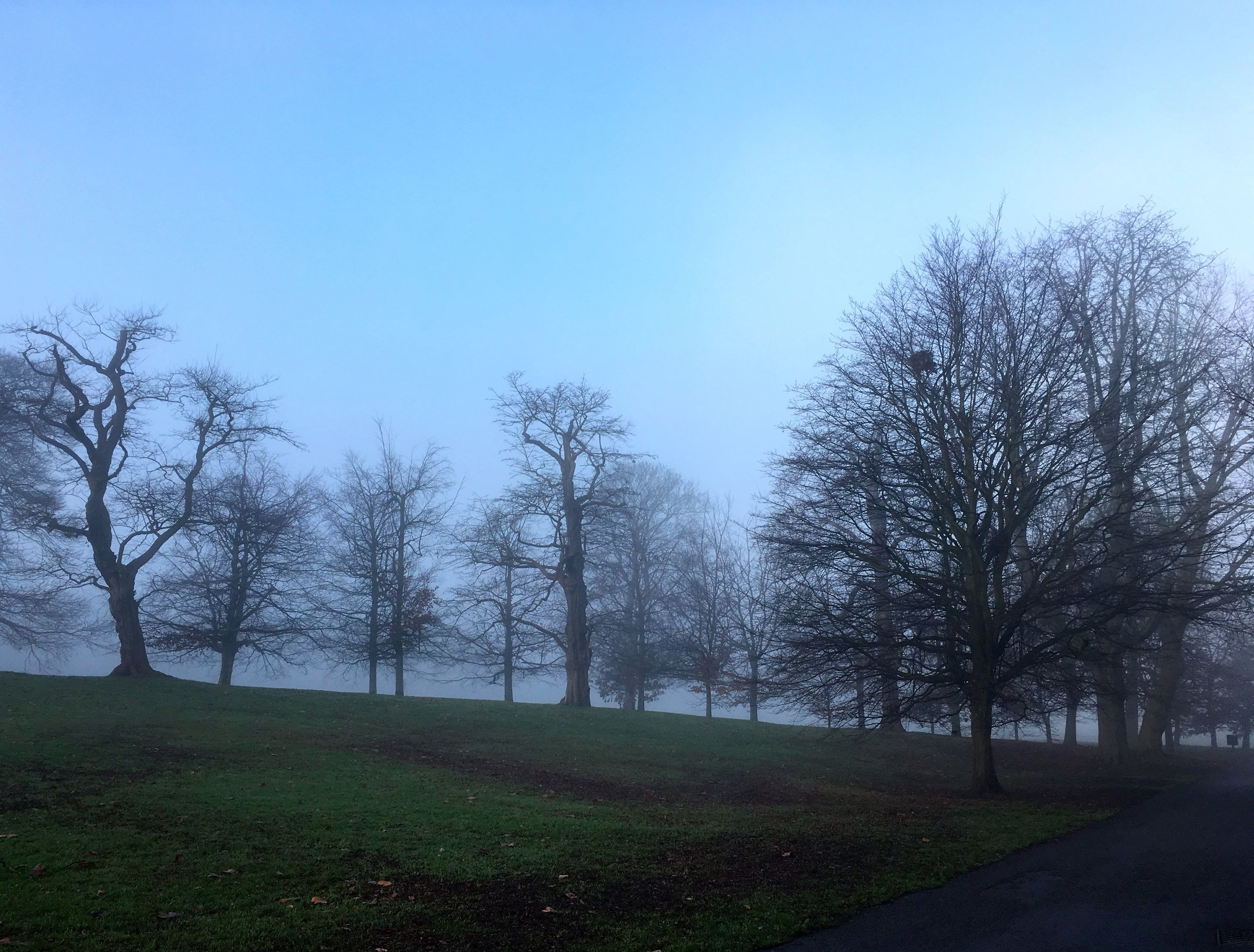 trees on the horizon on a frosty morning