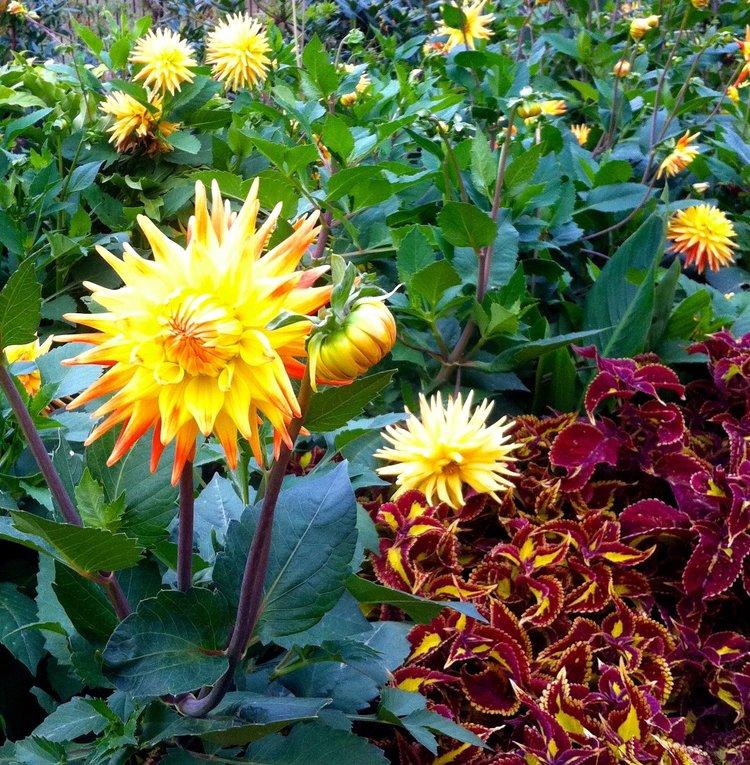 August: A diversion through the flower garden