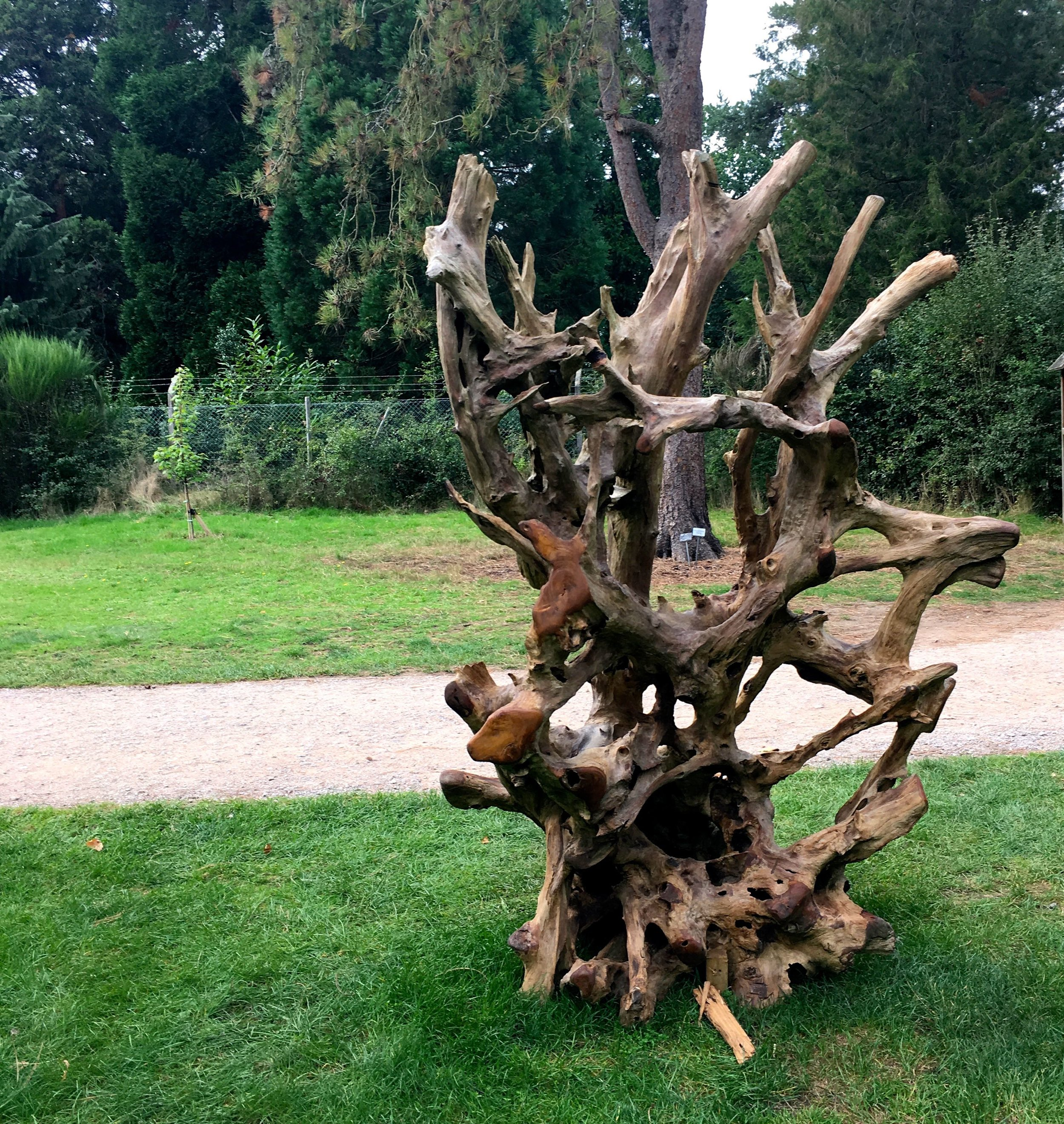 This teak root throne looks equally good from behind