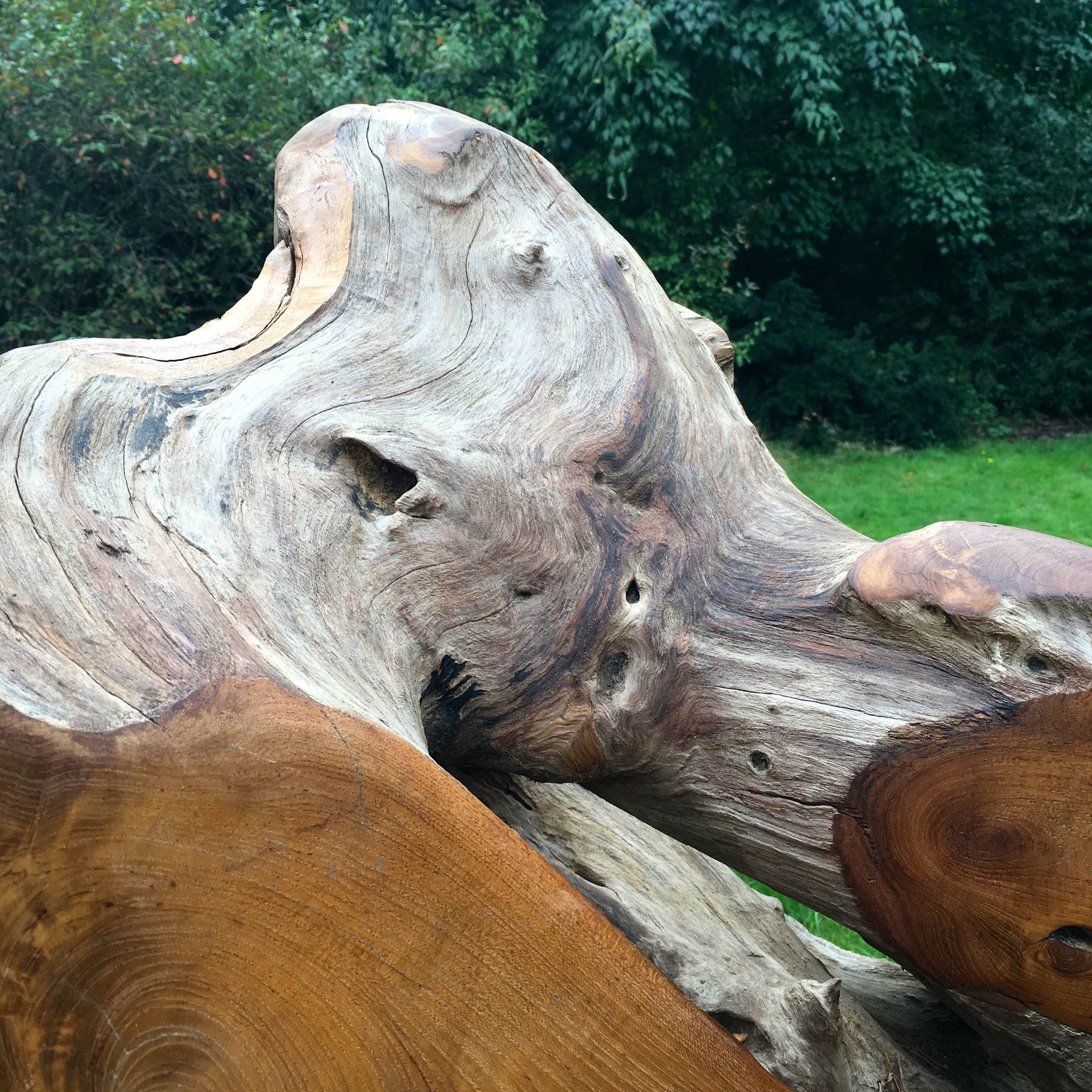 Taking a closer look at one of the teak root thrones during Woodfest at RHS Wisley
