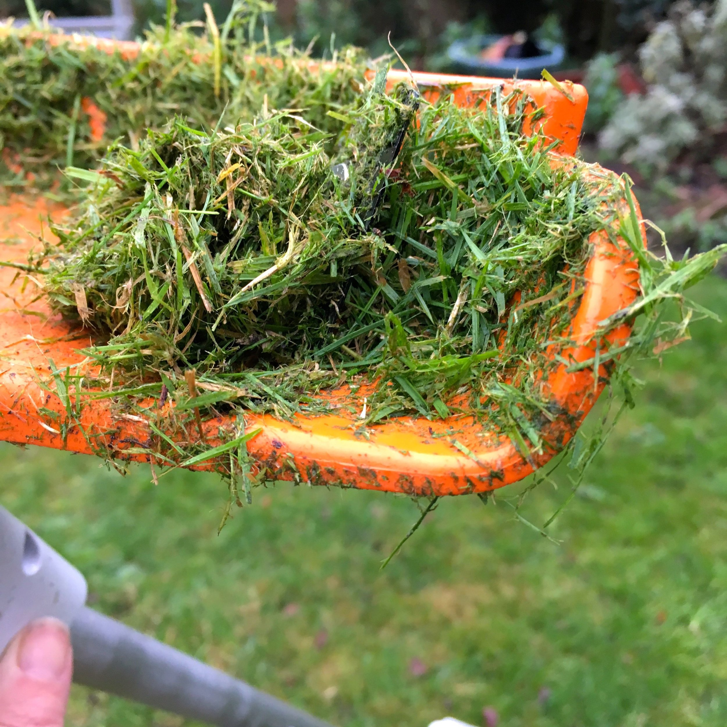A close up of the grass in the compact stihl trimmer because I couldn't resist an arty shot