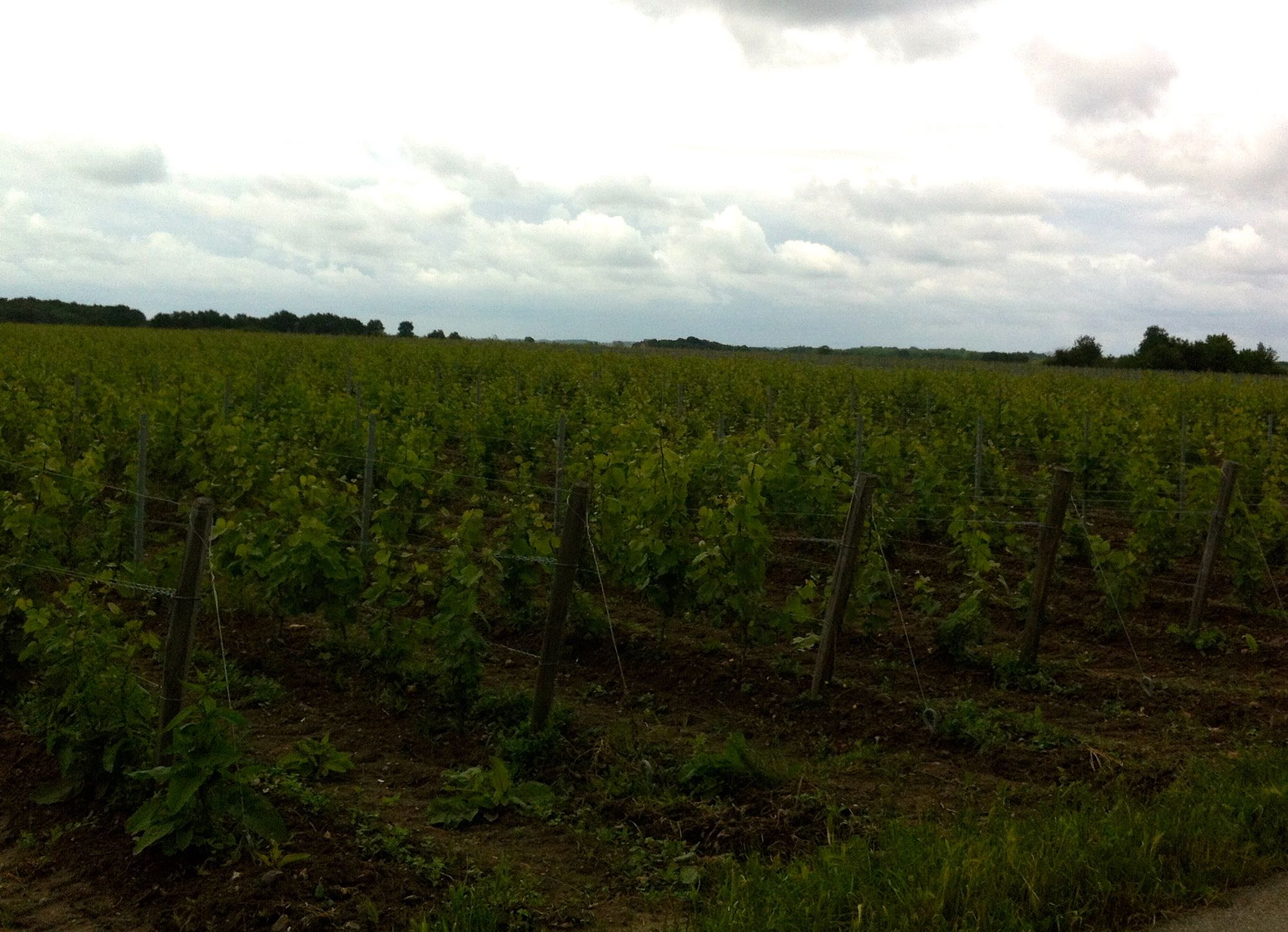 we cycled past vineyards too today which kind of made us thirsty