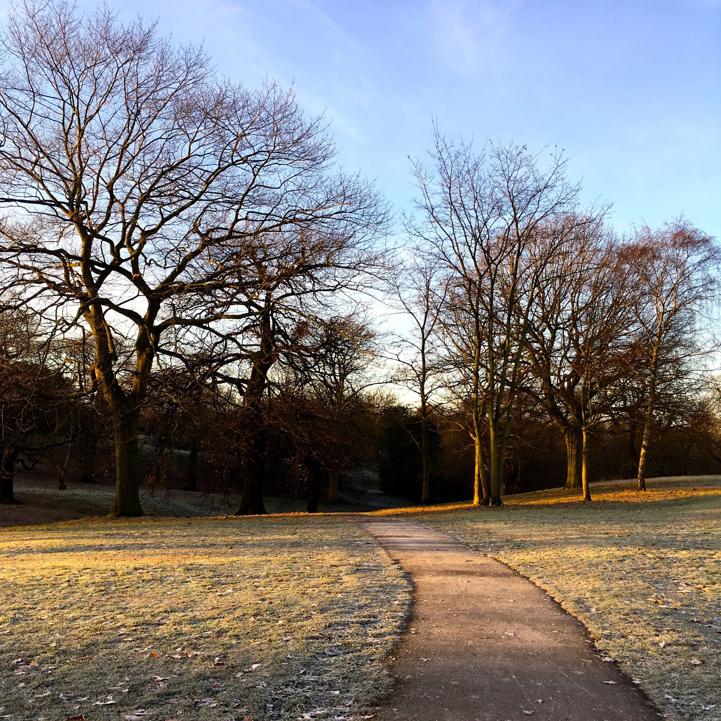 A heavy frost and a sunny morning in Greenwich Park