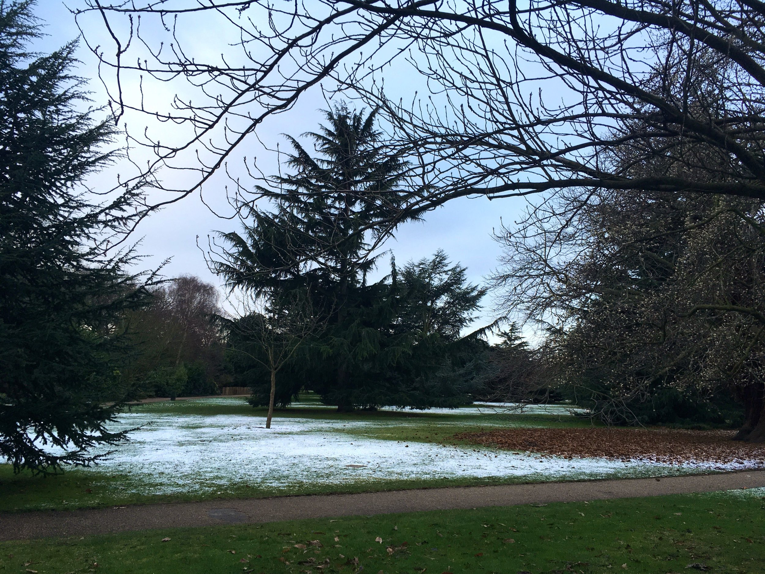 The morning after the snow in Greenwich Park