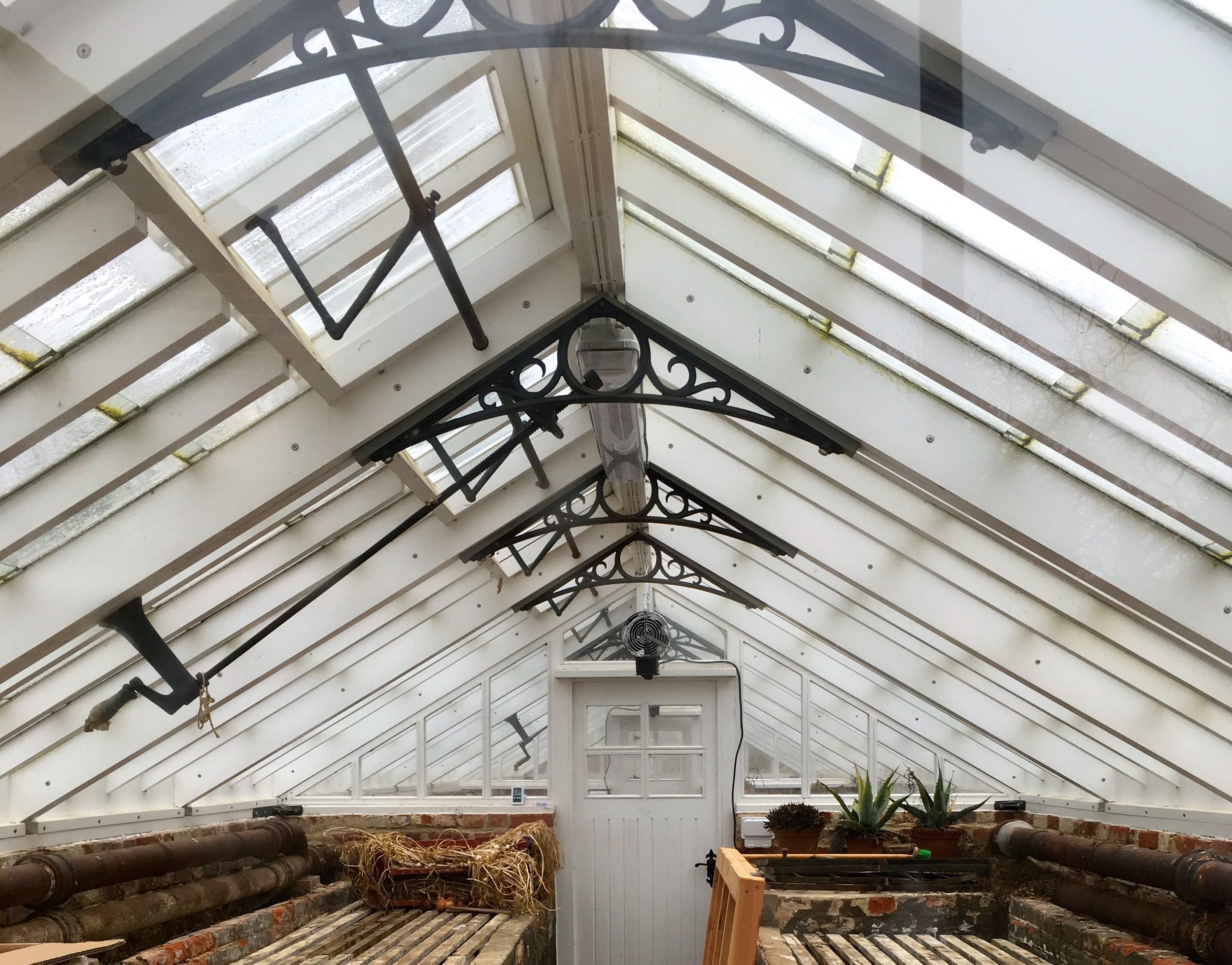 a peek inside the glasshouses - leaning in - to get a better look