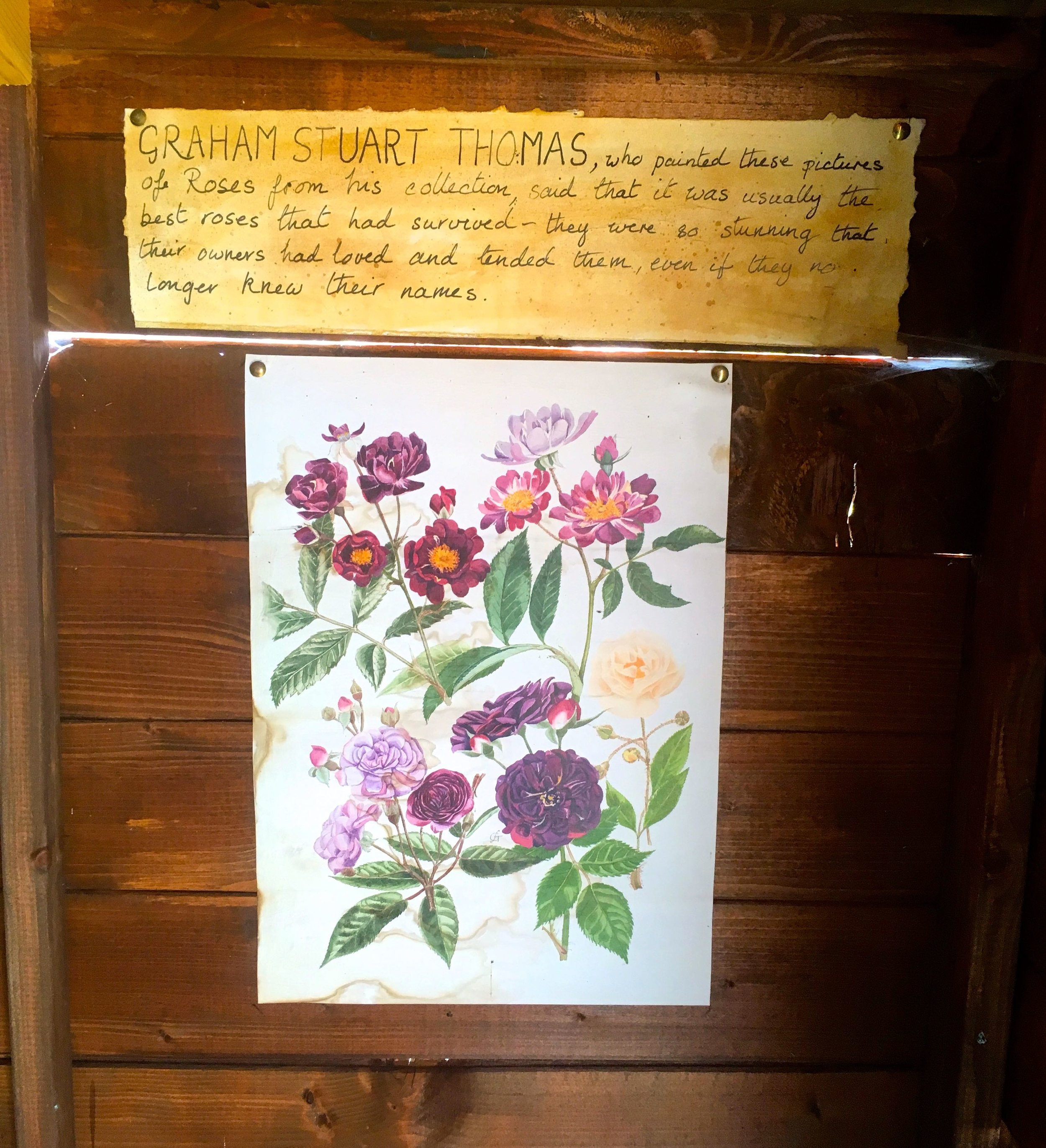 Hand-painted pictures of roses decorate the walls of the potting shed at Mottisfont