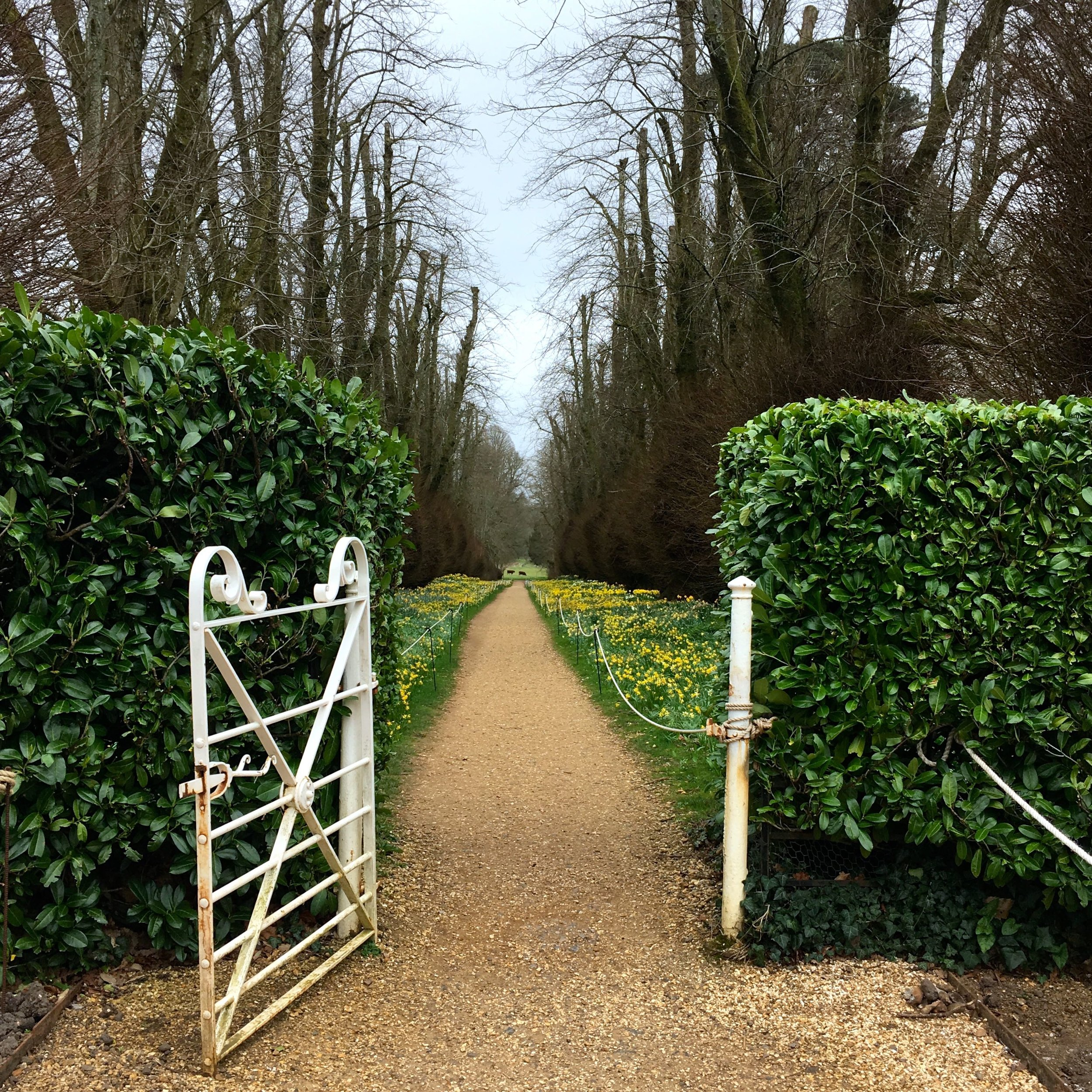 Heading through the gate into the Lime Avenue at Kingtson Lacy in Dorset
