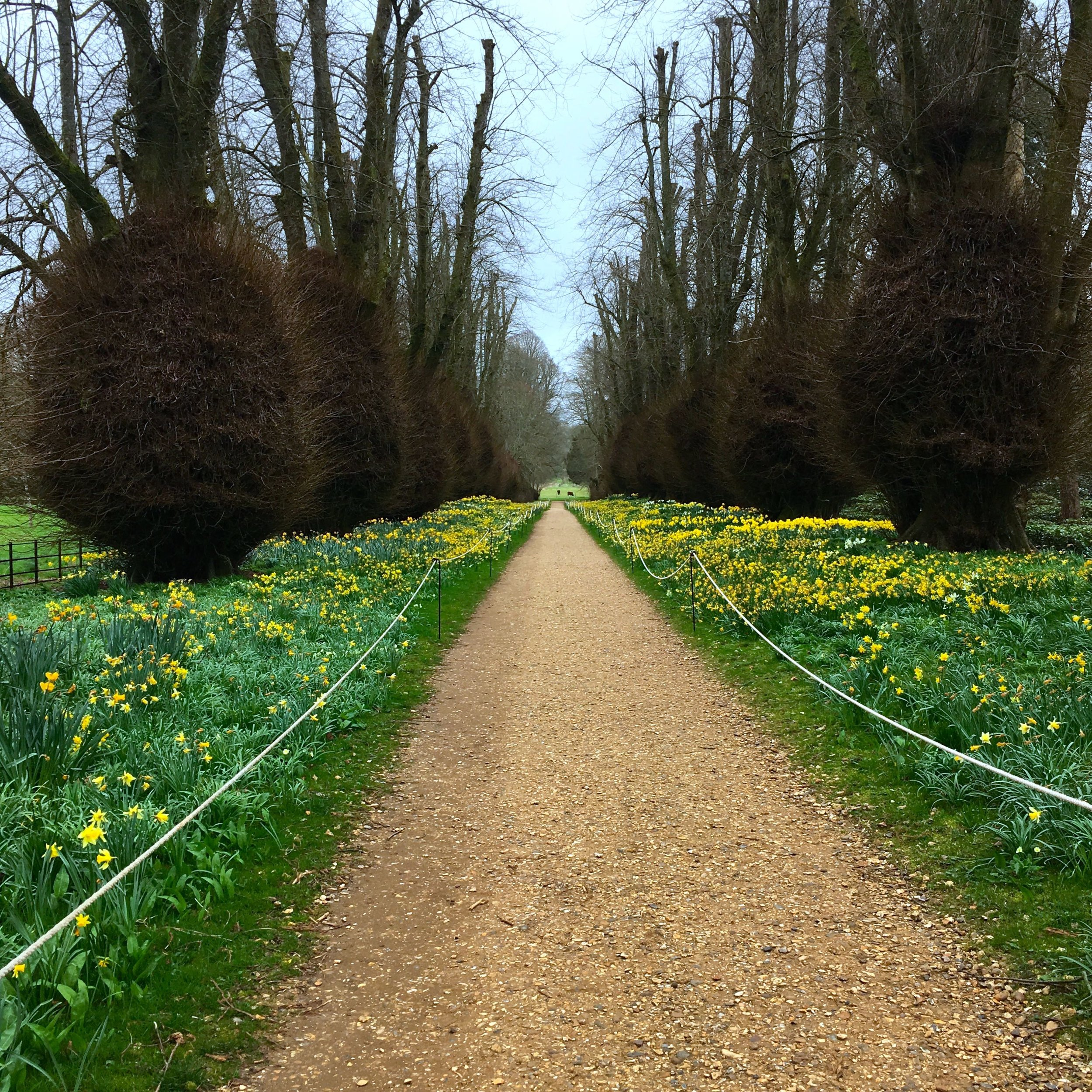 Quite a view of the Lime Avenue at Kingtson Lacy in Dorset