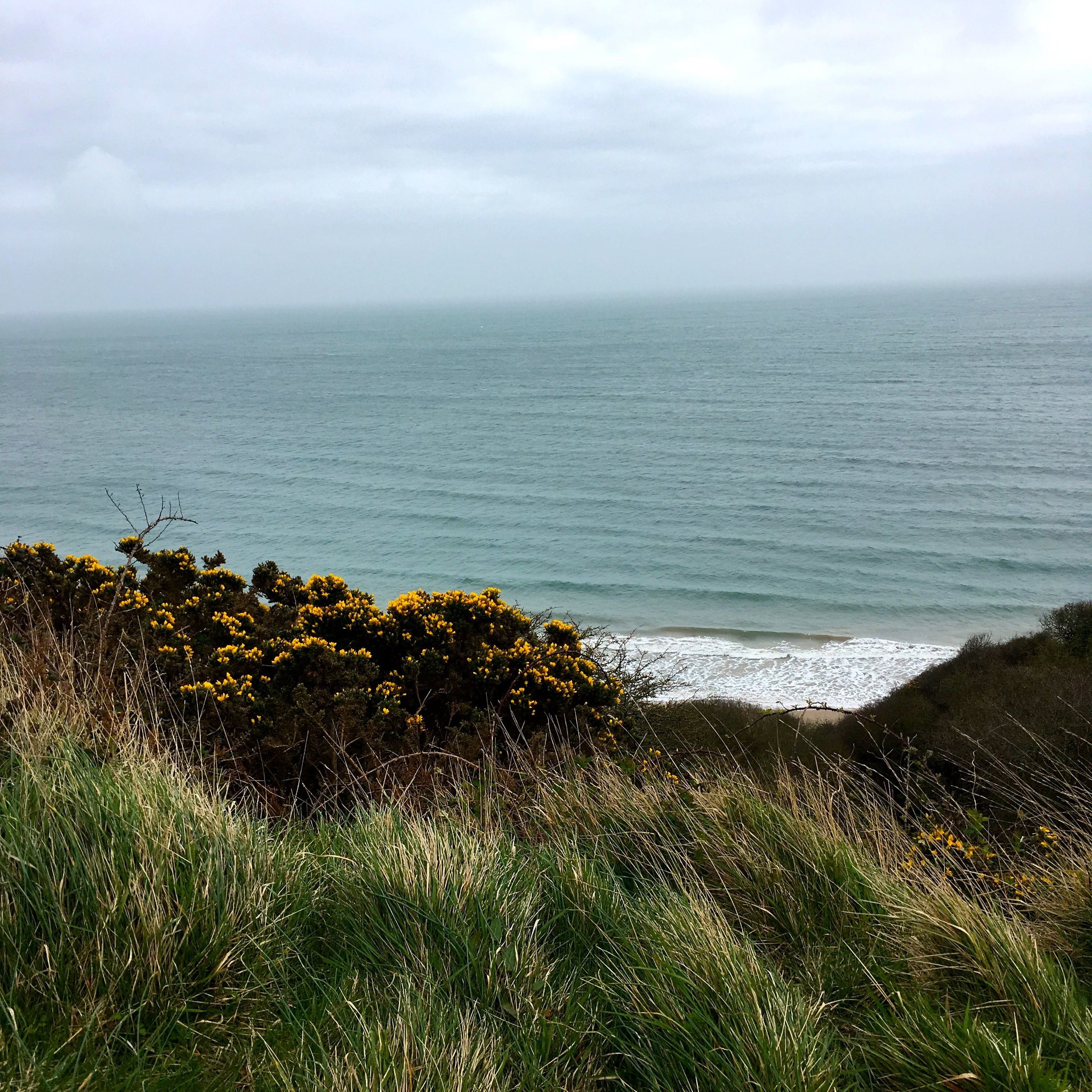 But still some glimpses of the sea framed perfectly by the gorse bushes