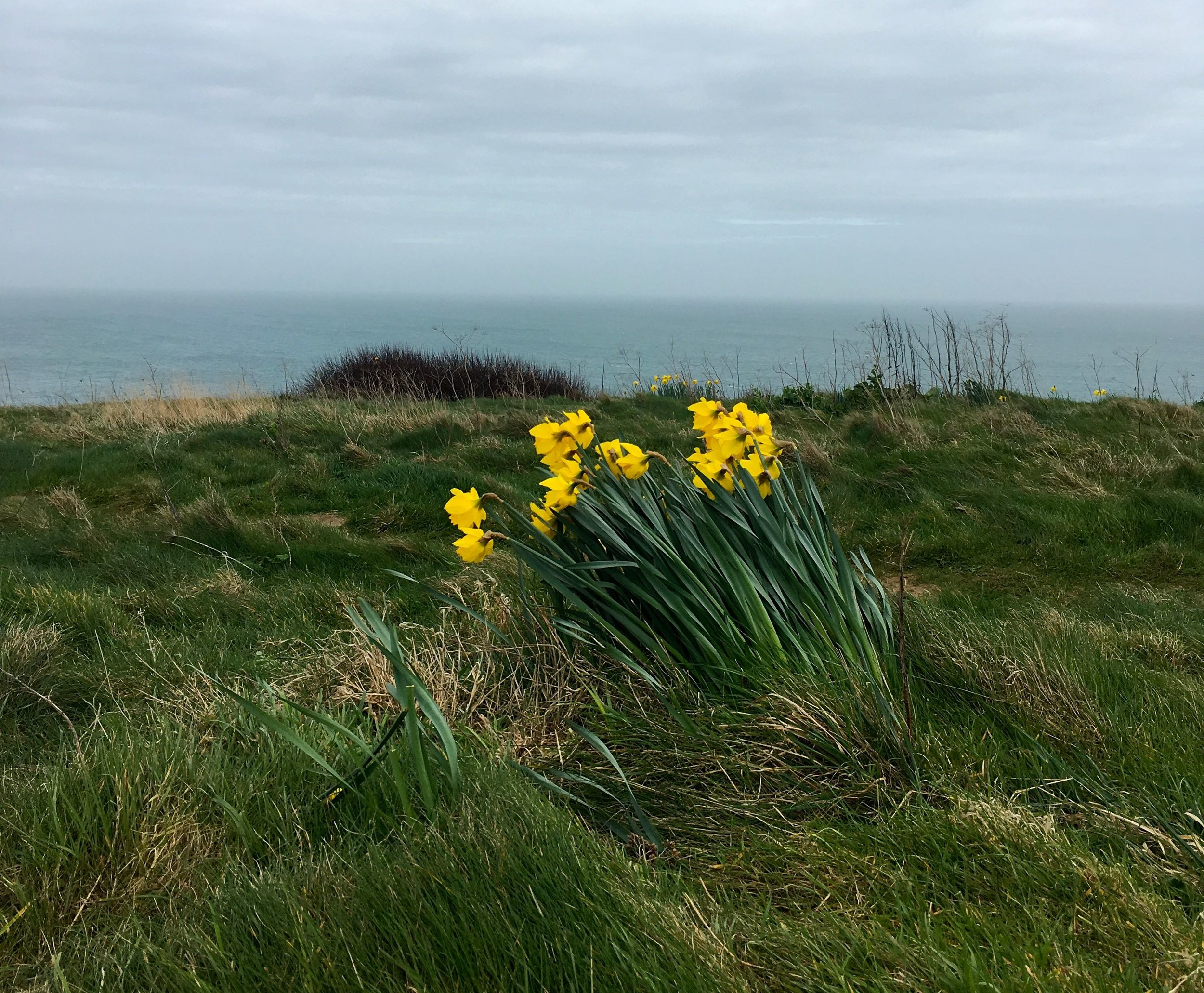 I told you it was windy - just look at those daffodils and how they're coping