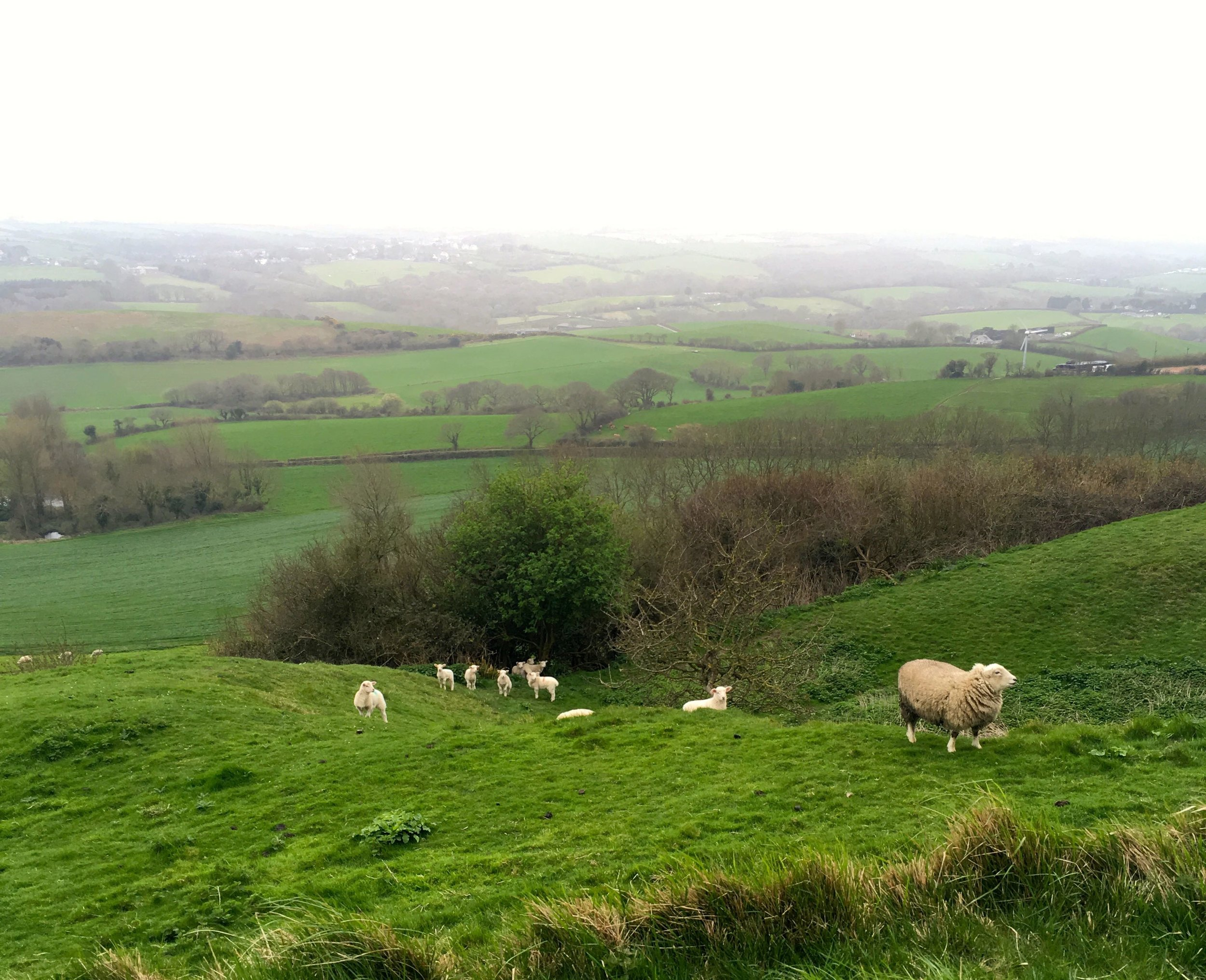 looking inland across the fields and trying not to disturb the sheep with their lambs