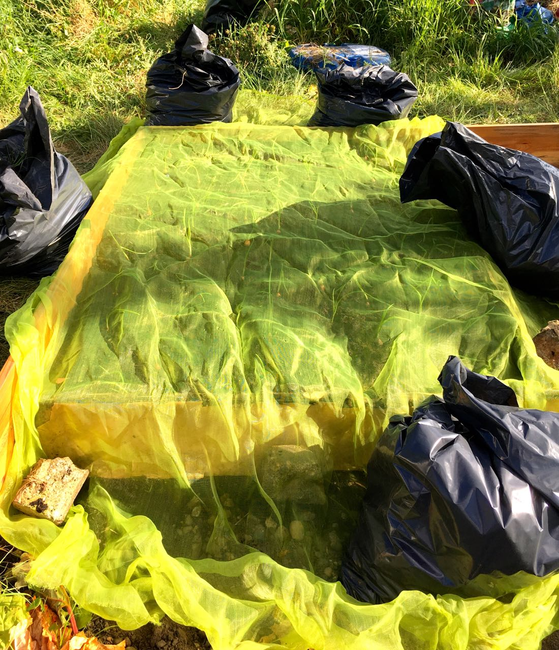 USING THE BLACK SACKS FULL OF WEEDS AS WEIGHTS FOR OUR NETTING