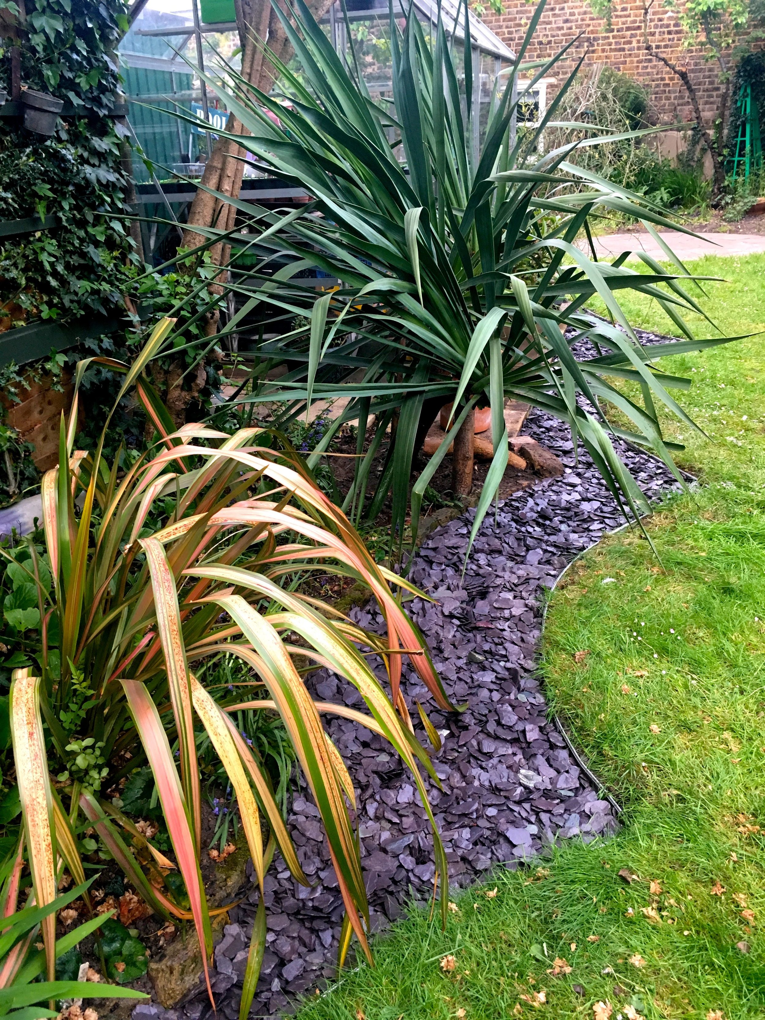 Looking up the garden towards the phormium and the yucca, now bathed in slate beneath them