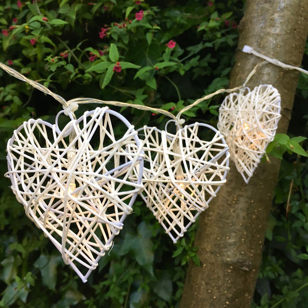 I'm loving the contrast of the white hearts against the bark and background of the ivy