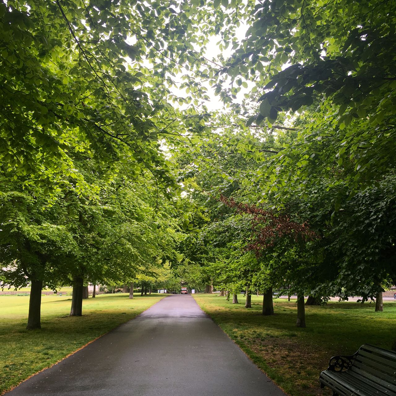 The view down my regular walking commute route to work where the canopy is now much more dense